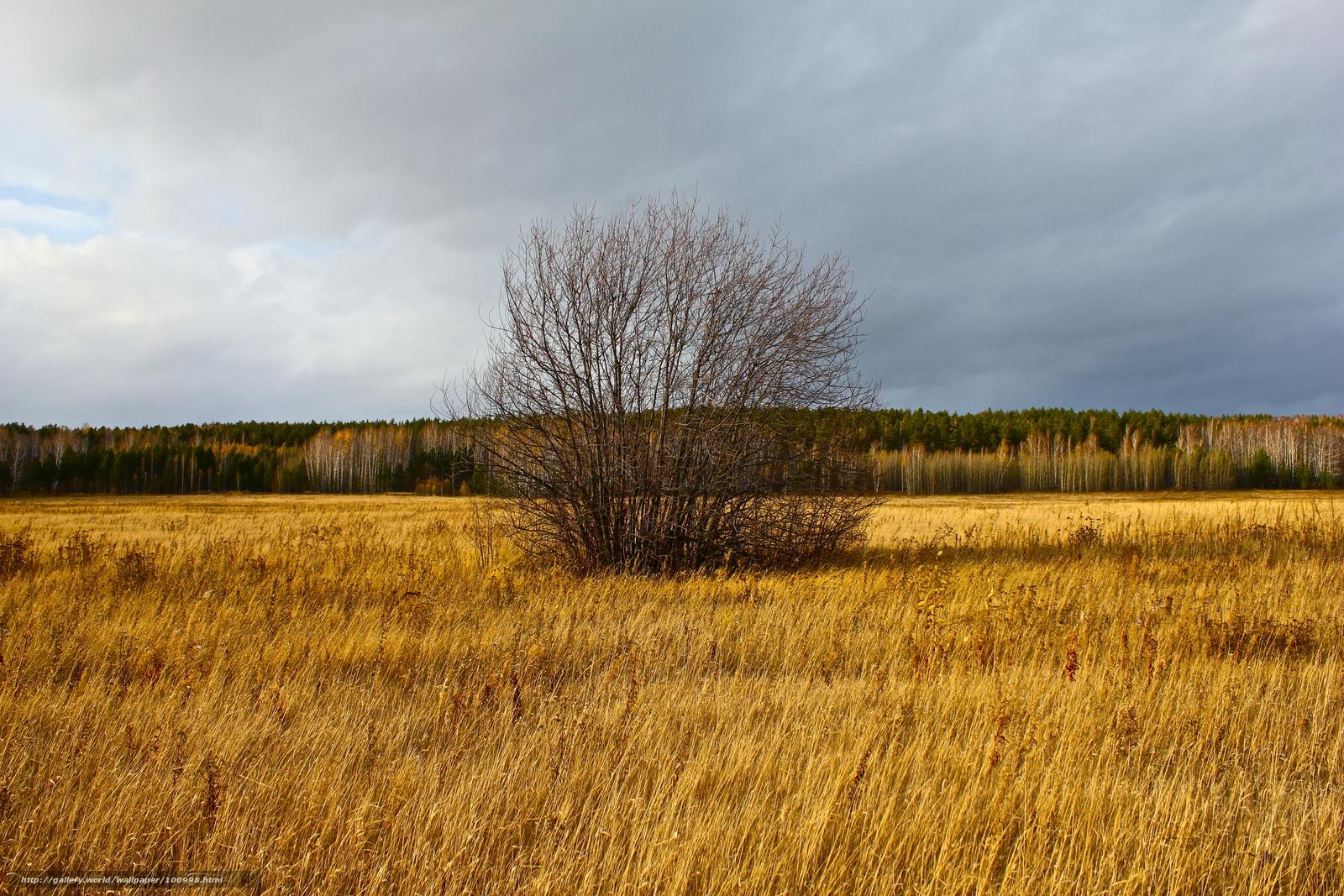 Download wallpaper tree,  field,  forest free desktop wallpaper in the resolution 5184x3456 — picture №100998