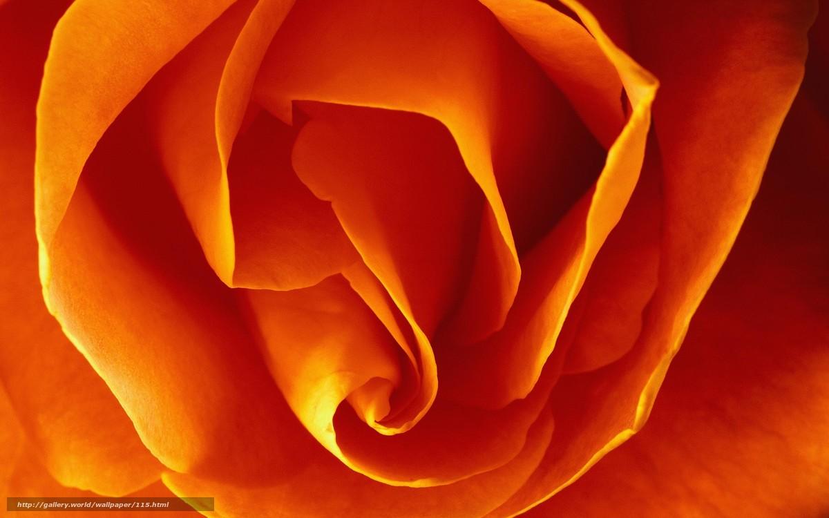 壁紙をダウンロード 花,  マクロ,  黄色 デスクトップの解像度のための無料壁紙 2560x1600 — 絵 №115