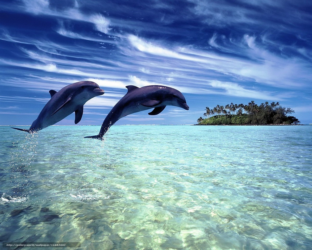 Download wallpaper Dolphins,  tropics,  Island free desktop wallpaper in the resolution 1280x1024 — picture №1168