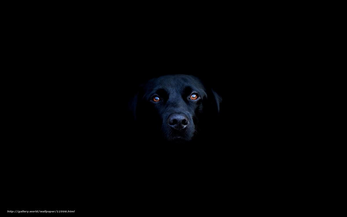 Download wallpaper black,  muzzle free desktop wallpaper in the resolution 2560x1600 — picture №12508