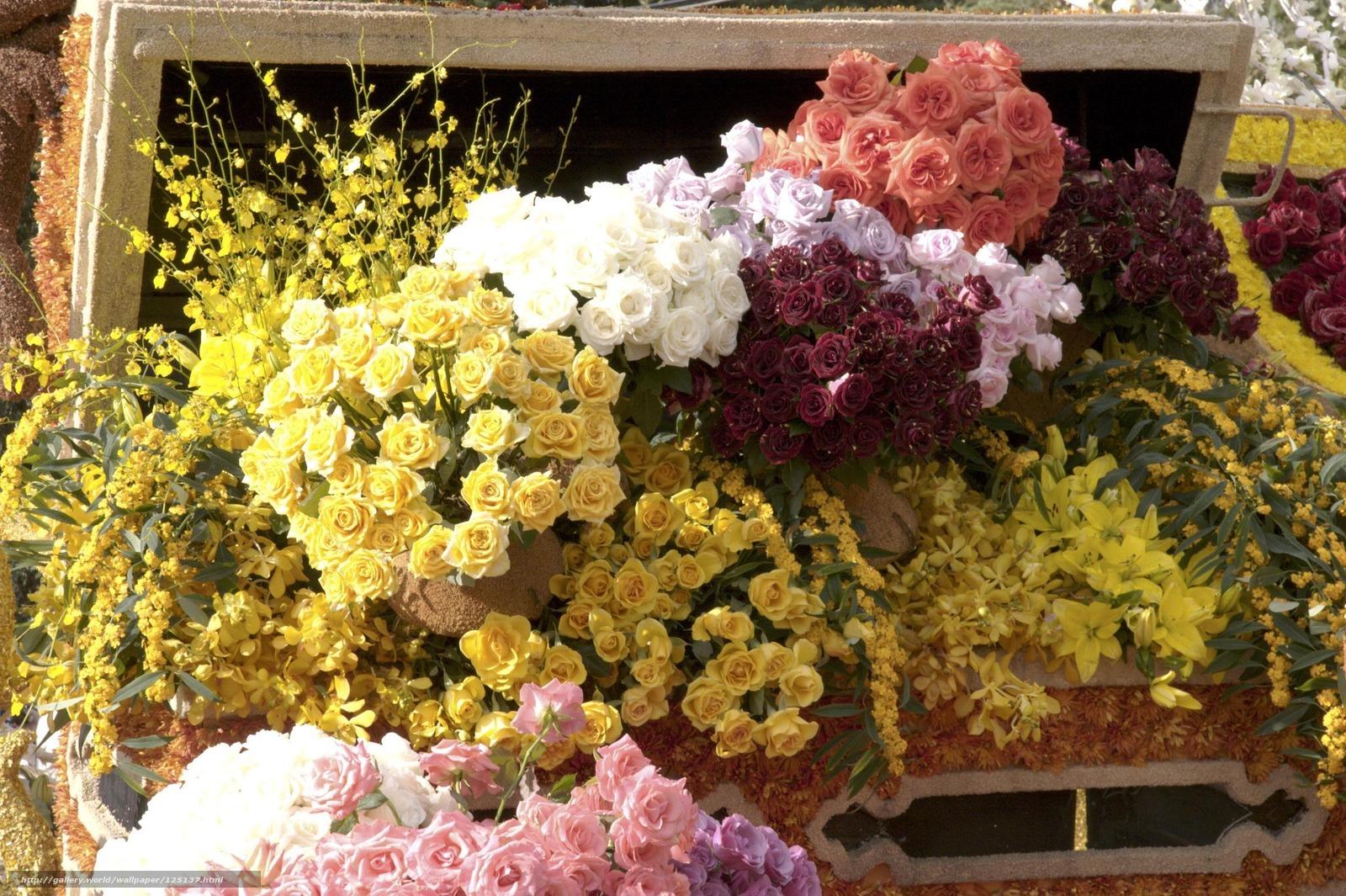 Скачать обои цветы,  розы,  прилавок бесплатно для рабочего стола в разрешении 2400x1598 — картинка №125137