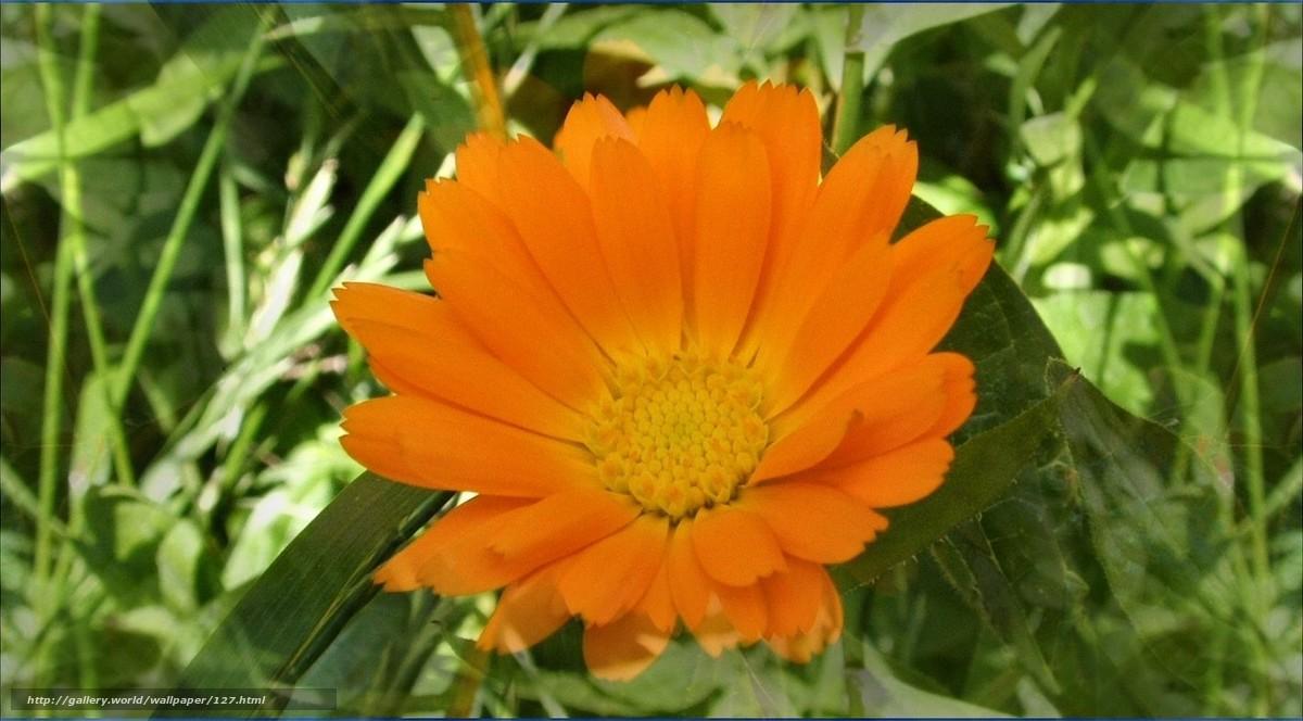 Скачать обои жёлтый,  цветы,  солнце бесплатно для рабочего стола в разрешении 1423x787 — картинка №127