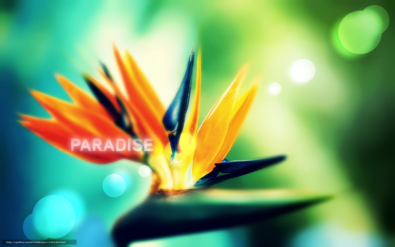 scaricare gli sfondi una versione senza logo,  Paradiso,  Emae Sfondi gratis per la risoluzione del desktop 2560x1600 — immagine №130248