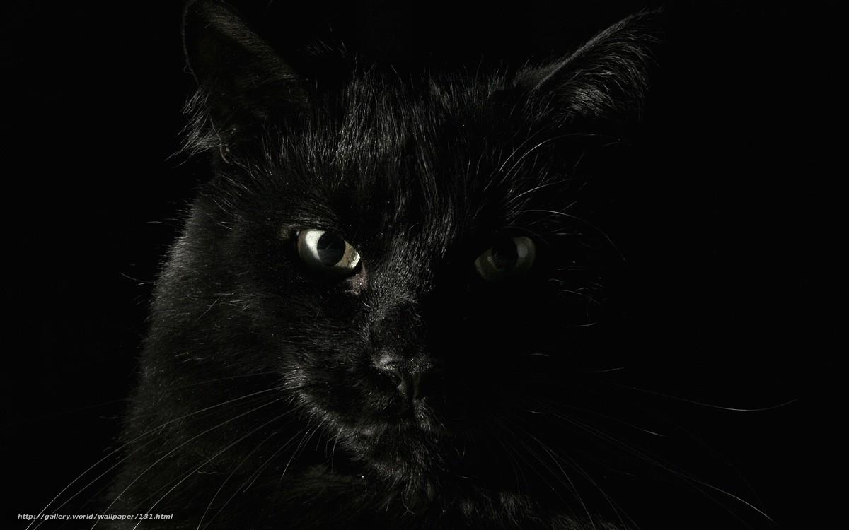 scaricare gli sfondi animali,  nero,  paura,  Koshak Sfondi gratis per la risoluzione del desktop 1920x1200 — immagine №131