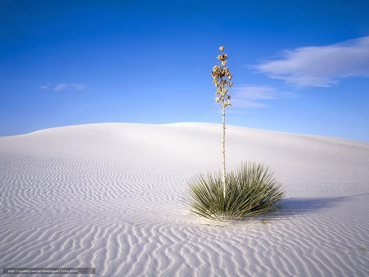 Скачать обои куст,  пустыня,  песок бесплатно для рабочего стола в разрешении 1600x1200 — картинка №1384