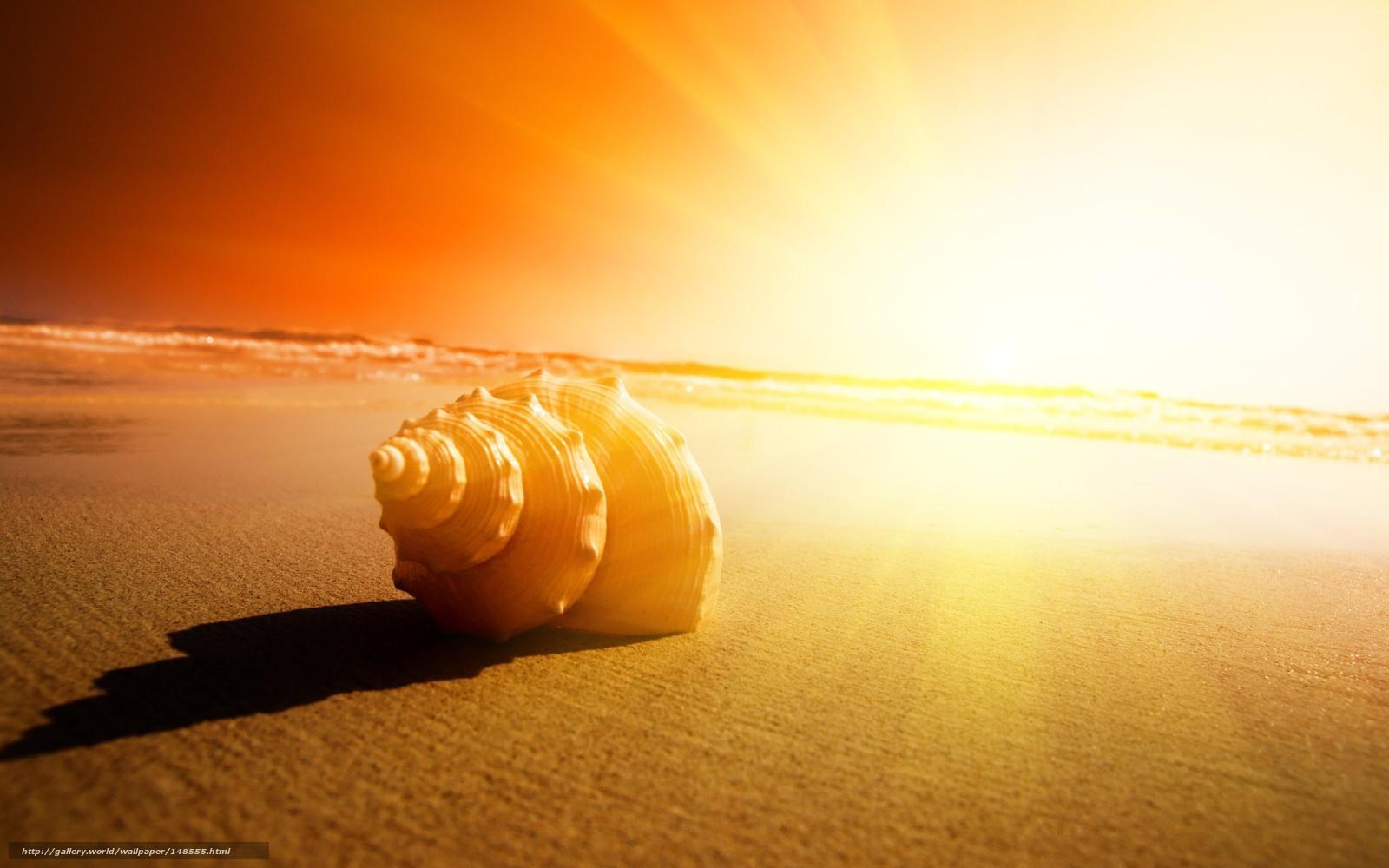 Scaricare Gli Sfondi Mare Tramonto Sabbia Conchiglia Sfondi