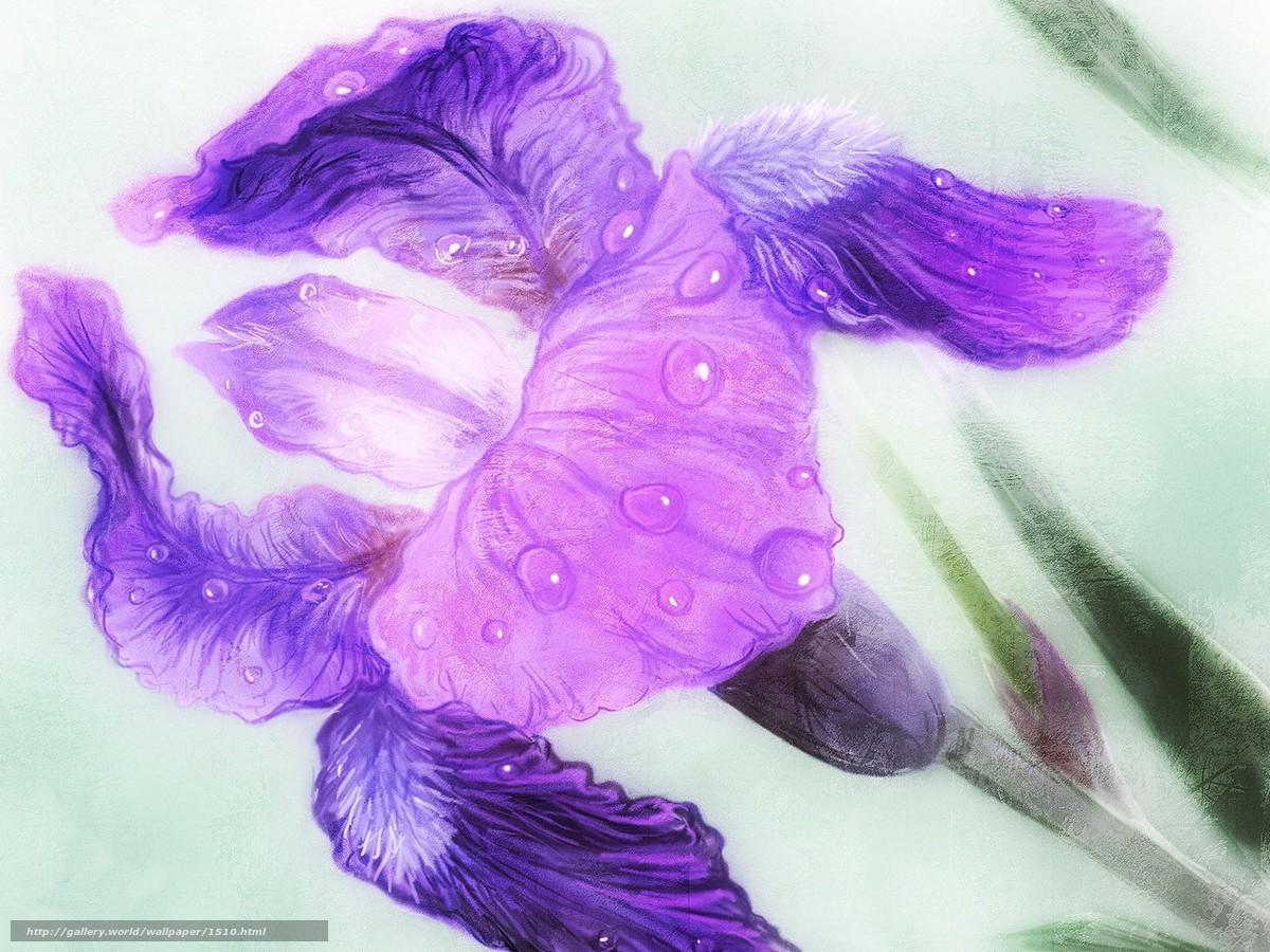 Descargar gratis flor,  gotas,  imagen Fondos de escritorio en la resolucin 1280x960 — imagen №1510