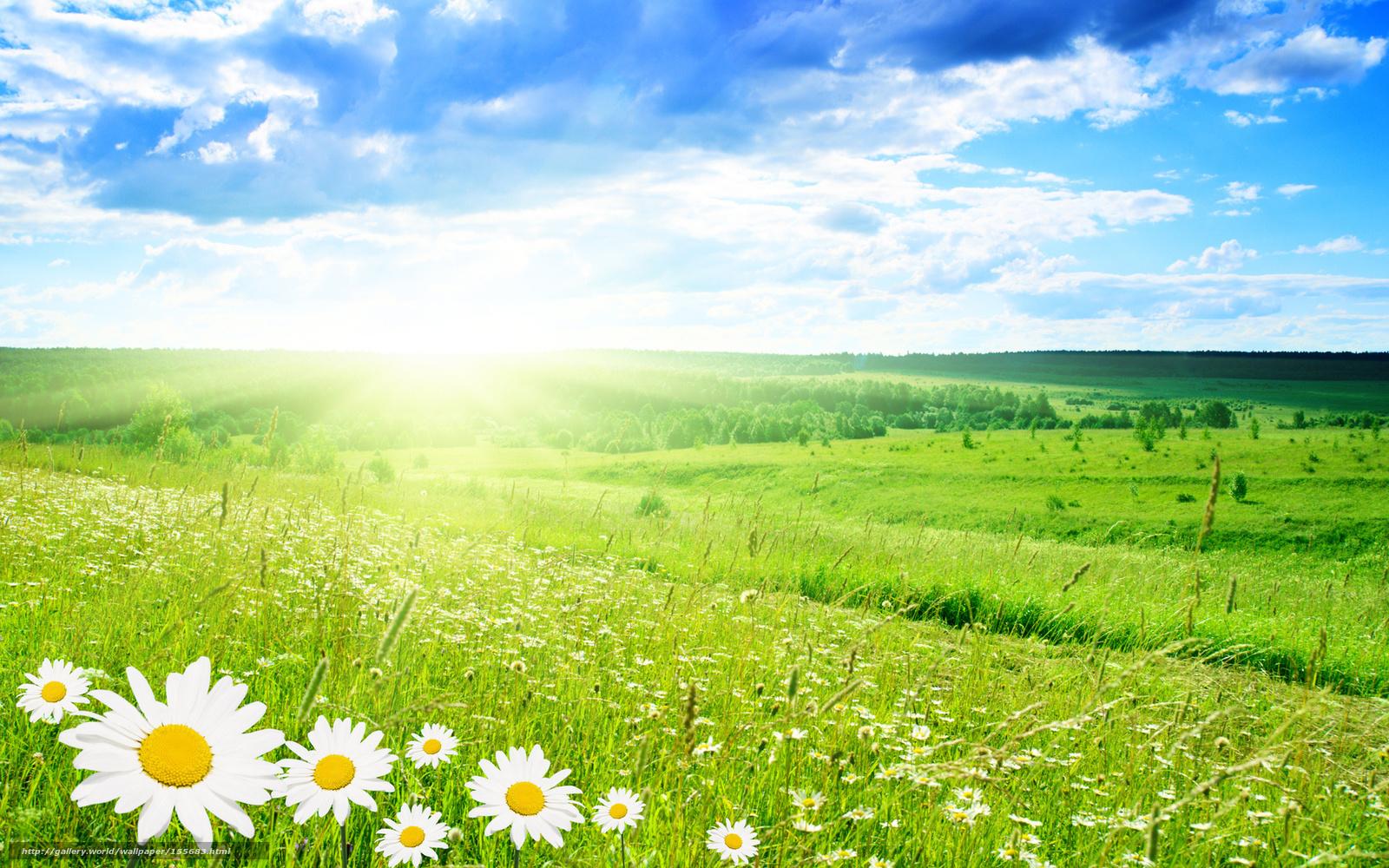 Картинки лето поле