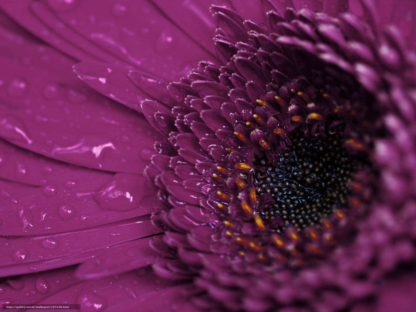 Descargar gratis flor,  Ptalos,  gotas,  roco Fondos de escritorio en la resolucin 1800x1350 — imagen №157248