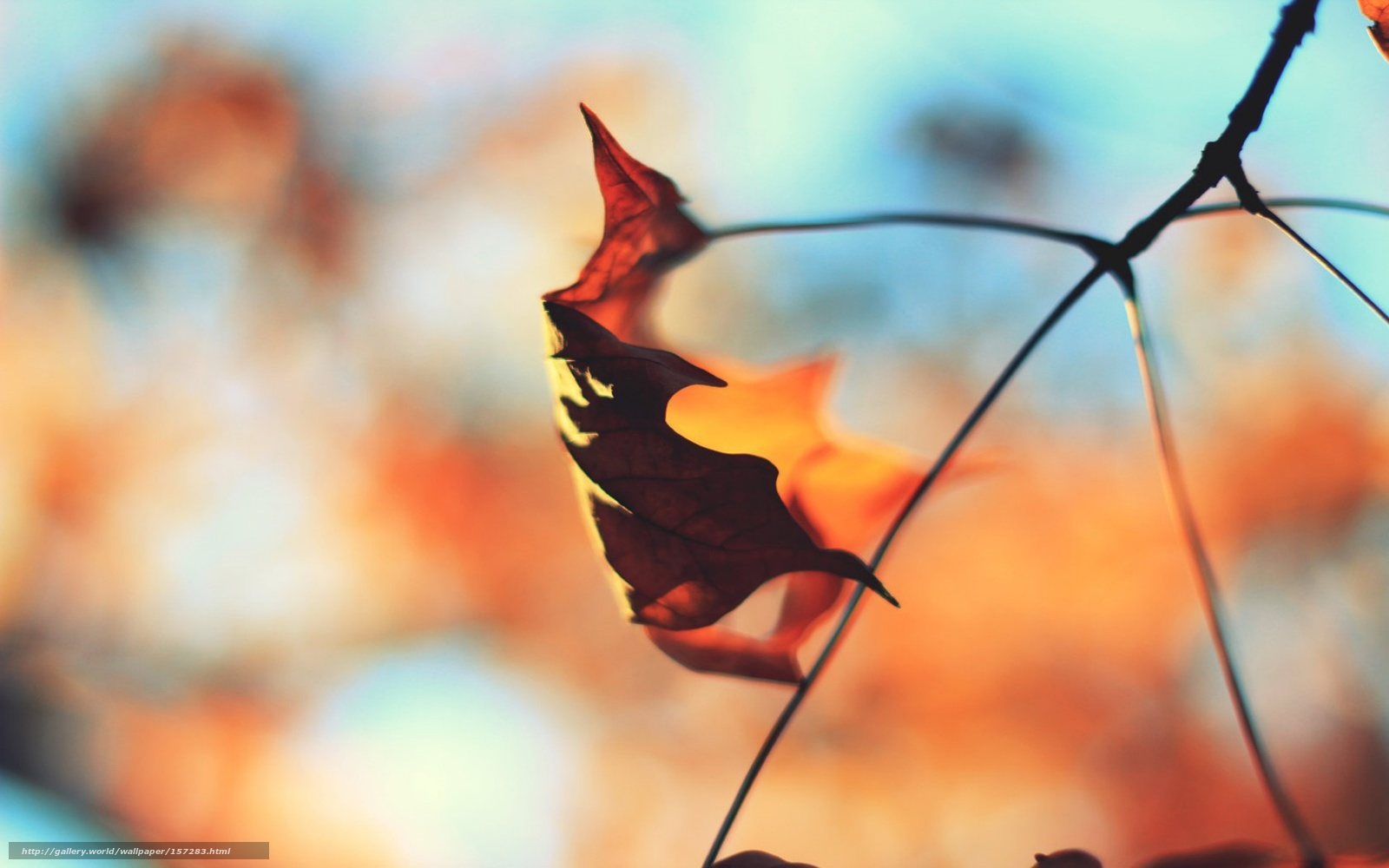 Download wallpaper autumn,  sheet,  branch free desktop wallpaper in the resolution 1680x1050 — picture №157283