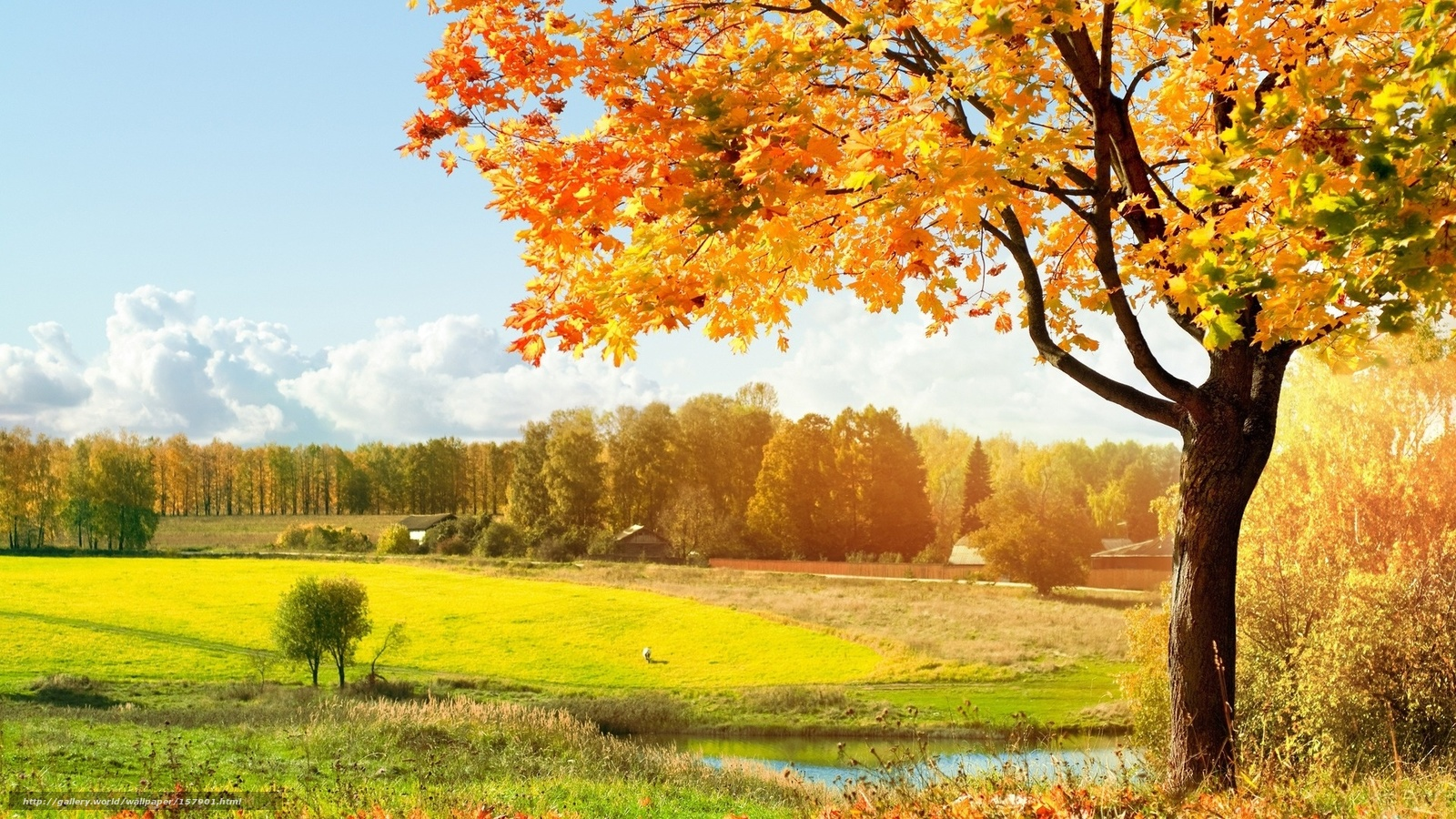 壁紙をダウンロード 秋 木 落葉 緑 デスクトップの解像度のための無料壁紙 1920x1080 絵 157901