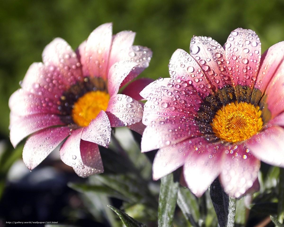 Tlcharger Fond d'ecran Fleurs,  rose,  gouttes,  perle Fonds d'ecran gratuits pour votre rsolution du bureau 1280x1024 — image №157