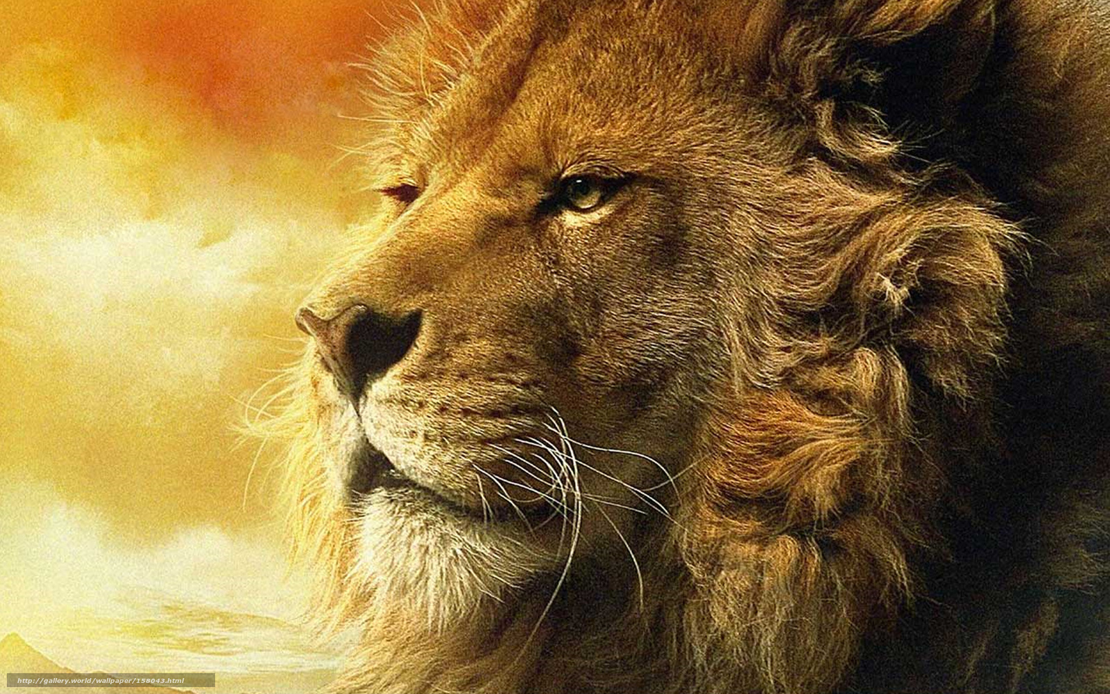 Download wallpaper lion, head, view free desktop wallpaper in the resolution 1919x1200 — picture №158043