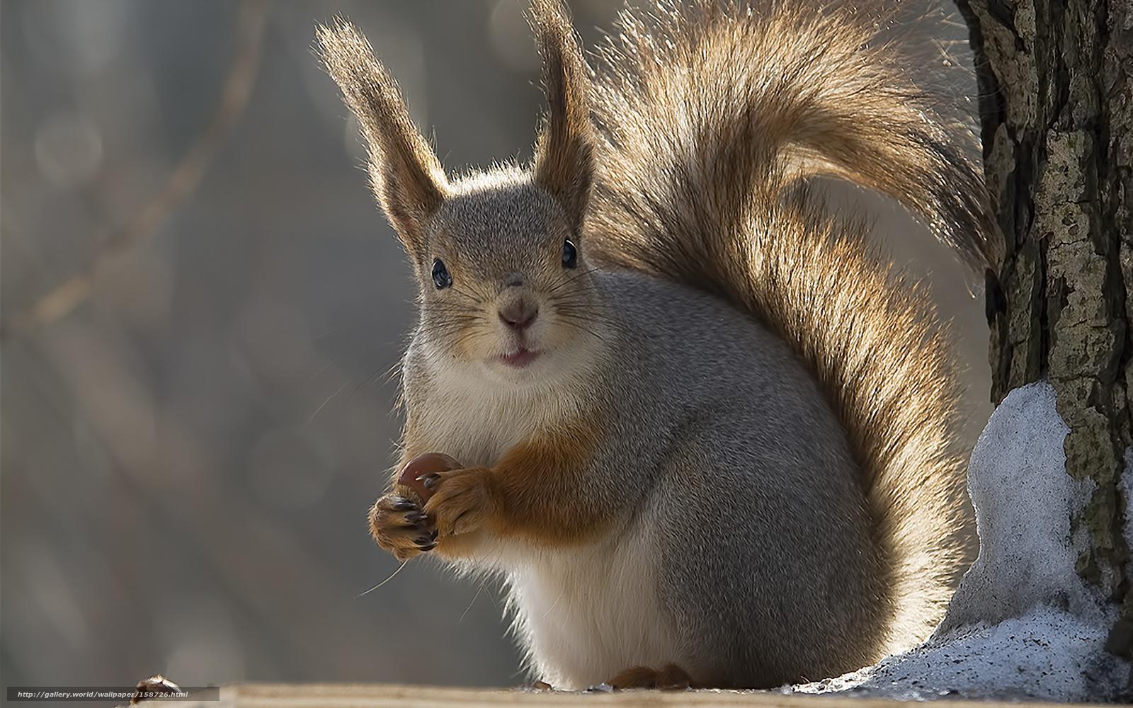 Tlcharger fond d 39 ecran animaux hiver fonds d 39 ecran for Fond ecran hiver animaux