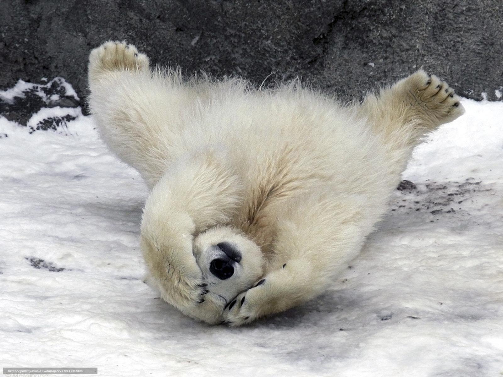 Scaricare gli sfondi animali sopportare sfondi gratis per for Foto desktop animali