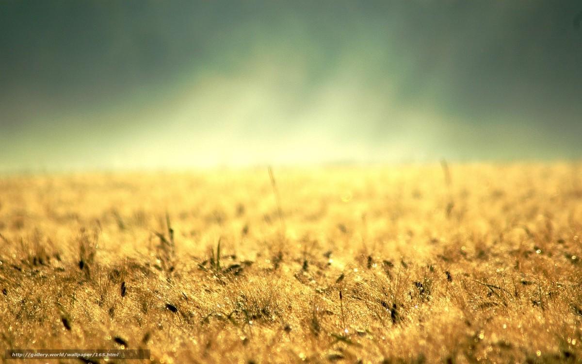 scaricare gli sfondi tavolo,  erba gialla,  oro,  terra Sfondi gratis per la risoluzione del desktop 1680x1050 — immagine №165