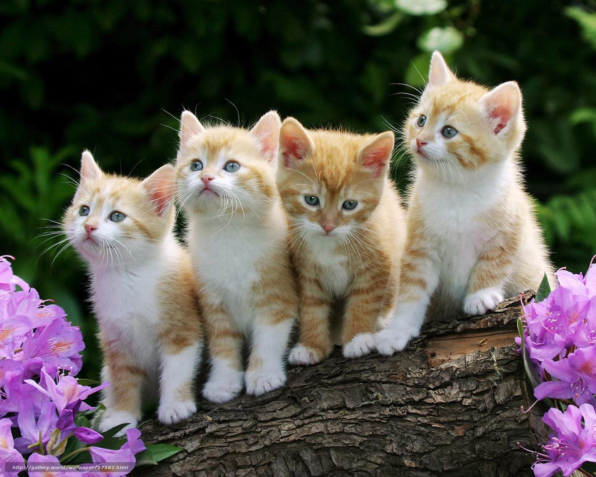 Скачать обои котята,  малыши,  рыжие,  пушистые бесплатно для рабочего стола в разрешении 1280x1024 — картинка №17282