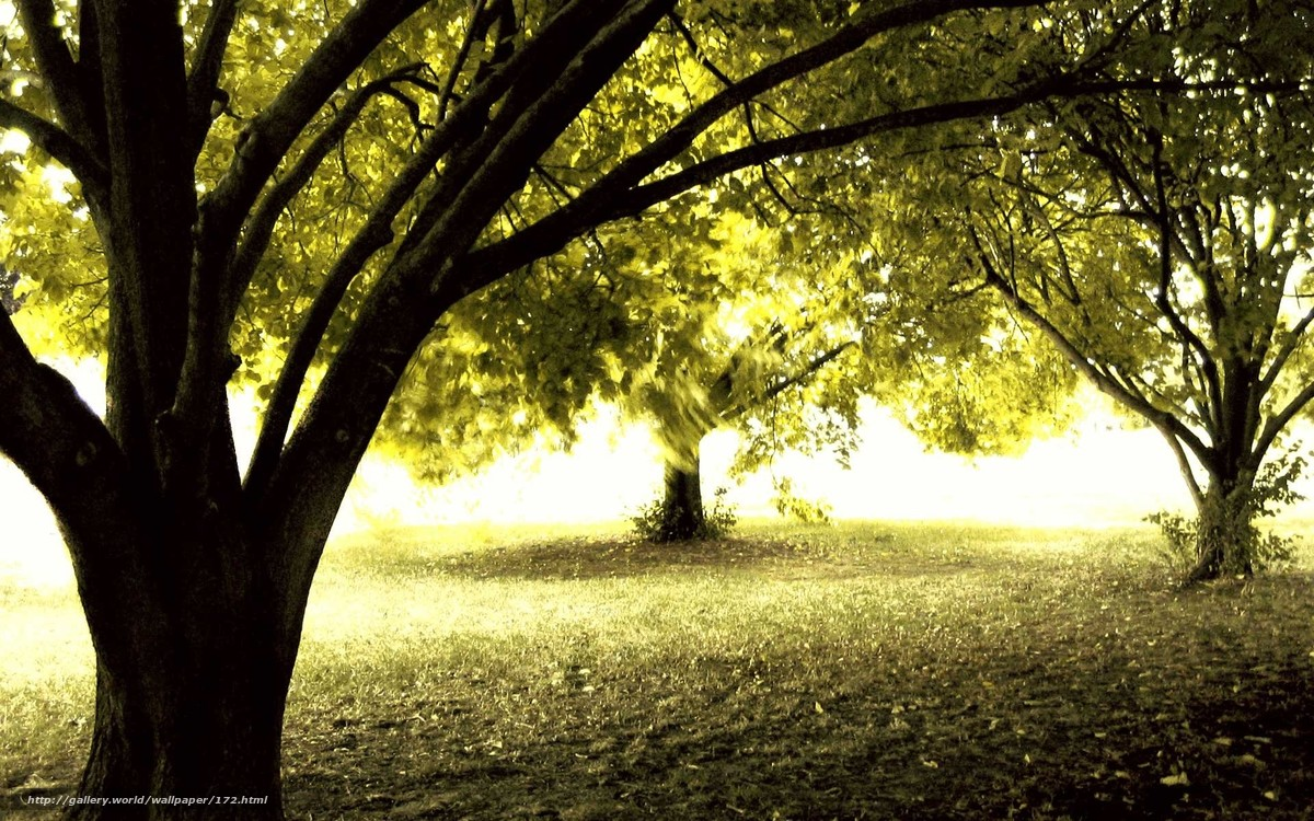 Скачать обои лес,  осень,  солнце,  деревья бесплатно для рабочего стола в разрешении 1920x1200 — картинка №172