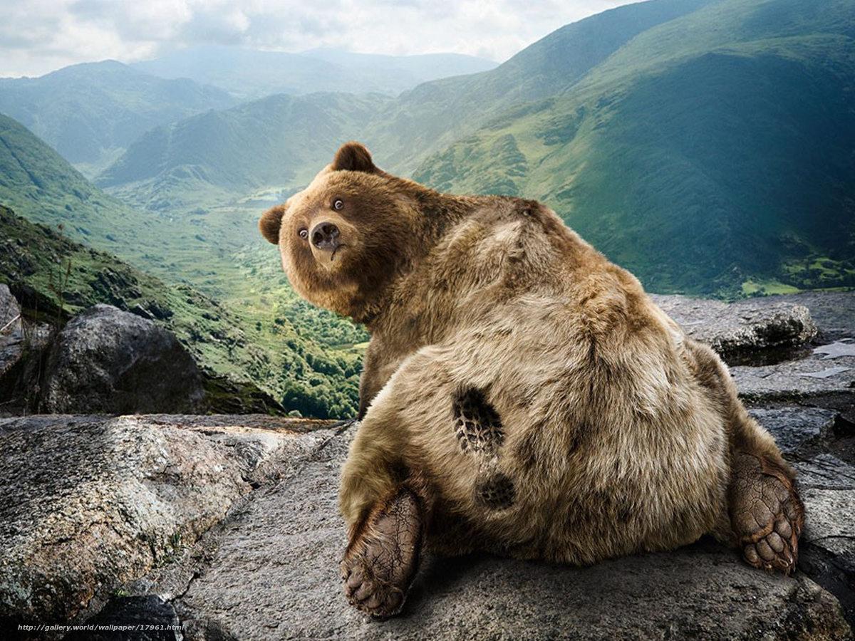 chlen-medvedya