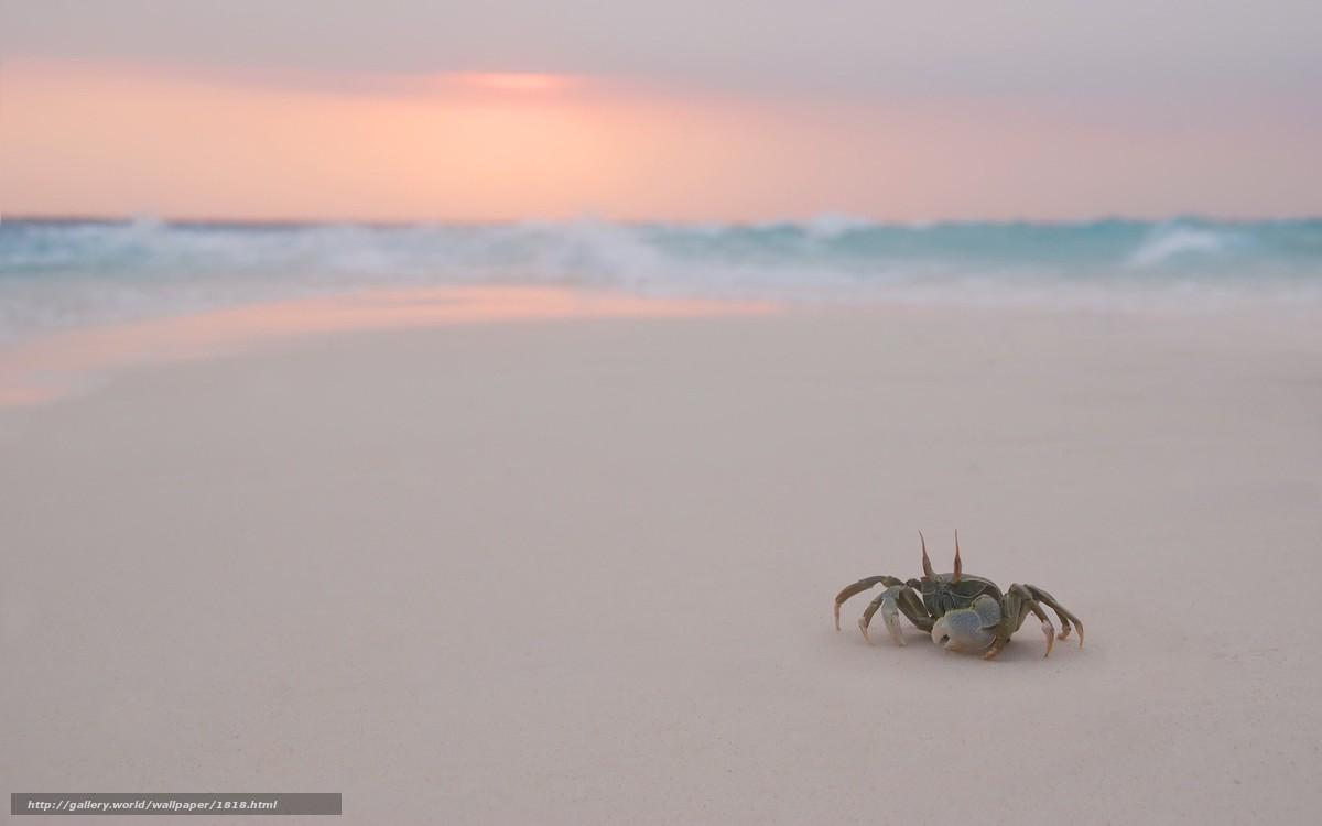 Скачать обои крабик,  пляж,  вечер бесплатно для рабочего стола в разрешении 1920x1200 — картинка №1818