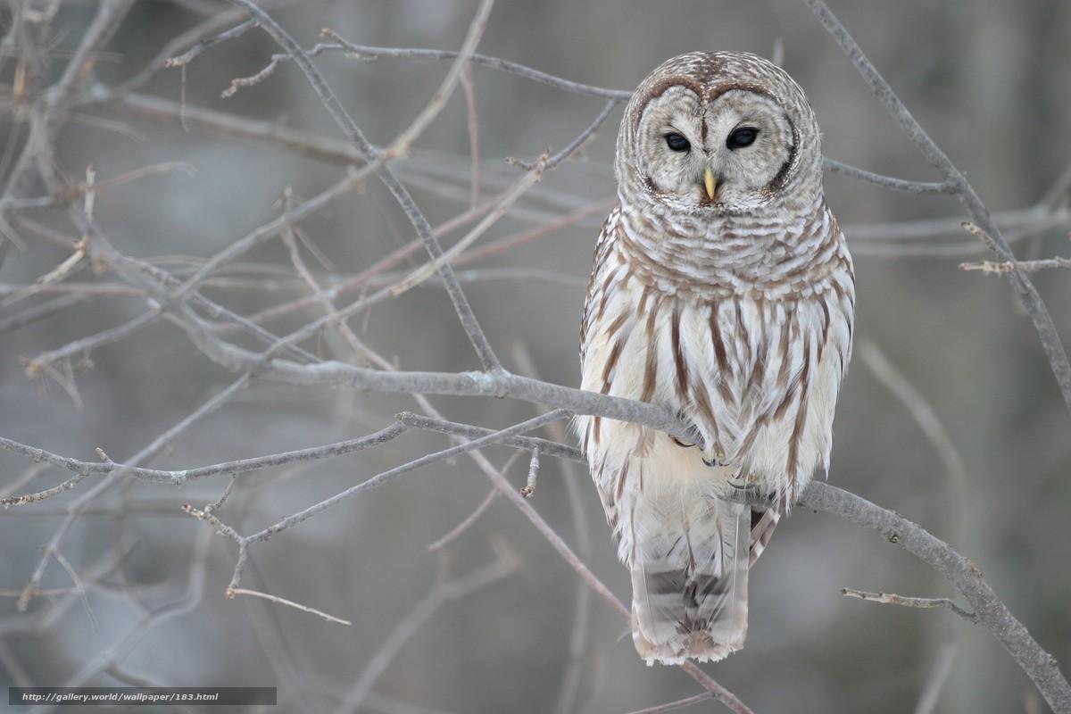 Tlcharger Fond d'ecran hibou,  hiver,  automne,  branche Fonds d'ecran gratuits pour votre rsolution du bureau 2560x1707 — image №183