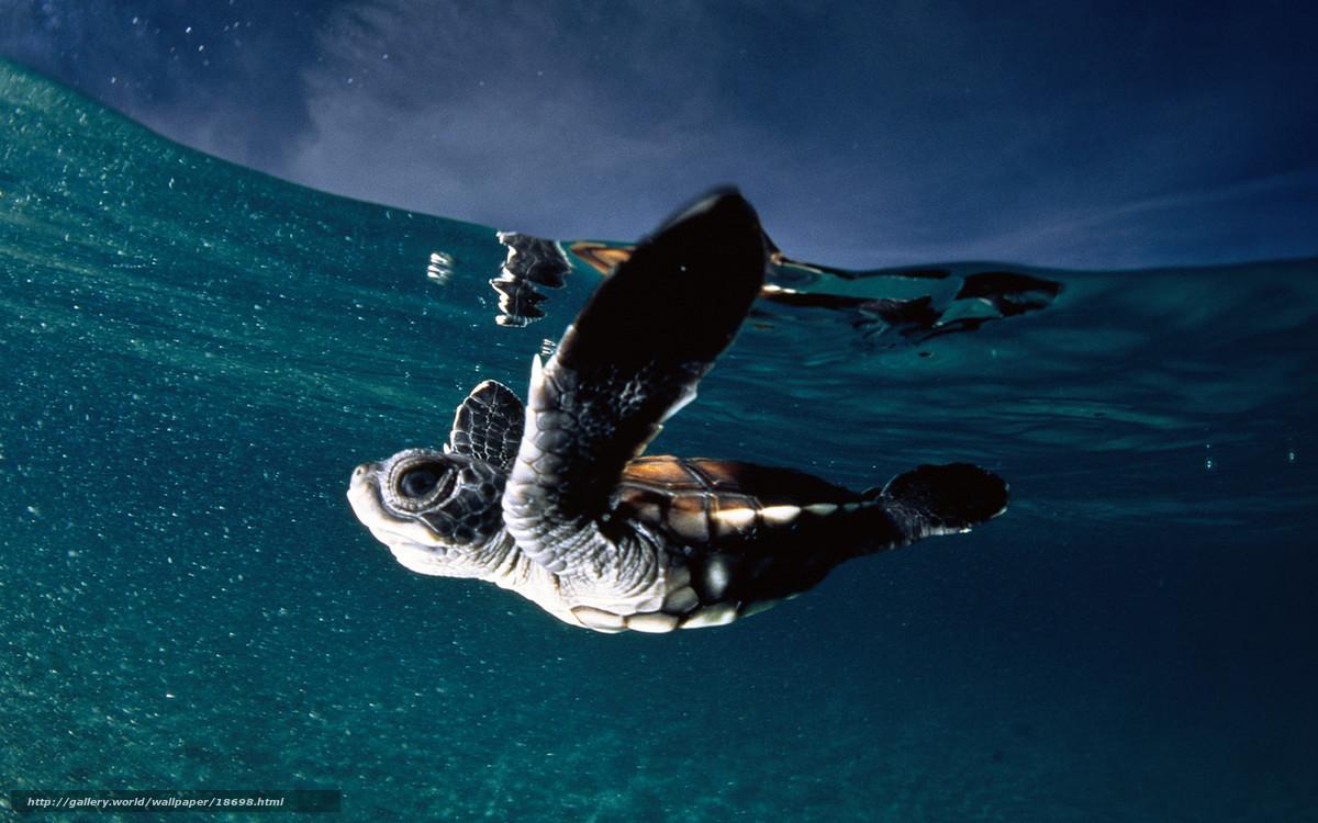 Scaricare Gli Sfondi Insetto Acqua Oceano Franzuzskaya Polinesia