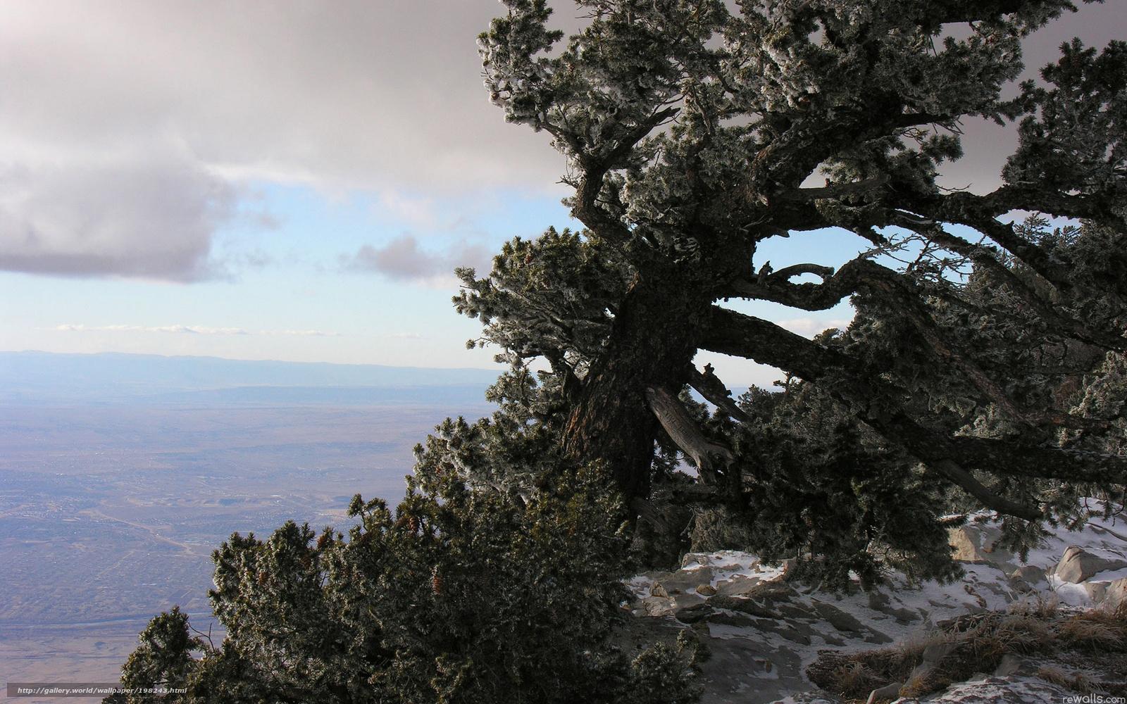 Скачать обои старое,   дерево,   гора,   высота бесплатно для рабочего стола в разрешении 1920x1200 — картинка №198243