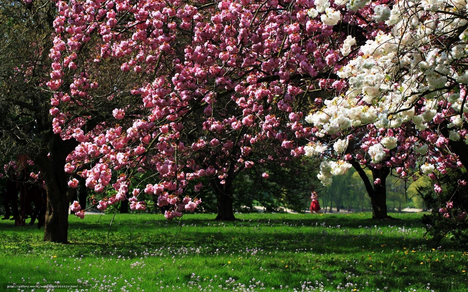 Pobra tapety wiosna kwiaty nastrj wiosna drzew darmowe for Immagini per desktop fiori