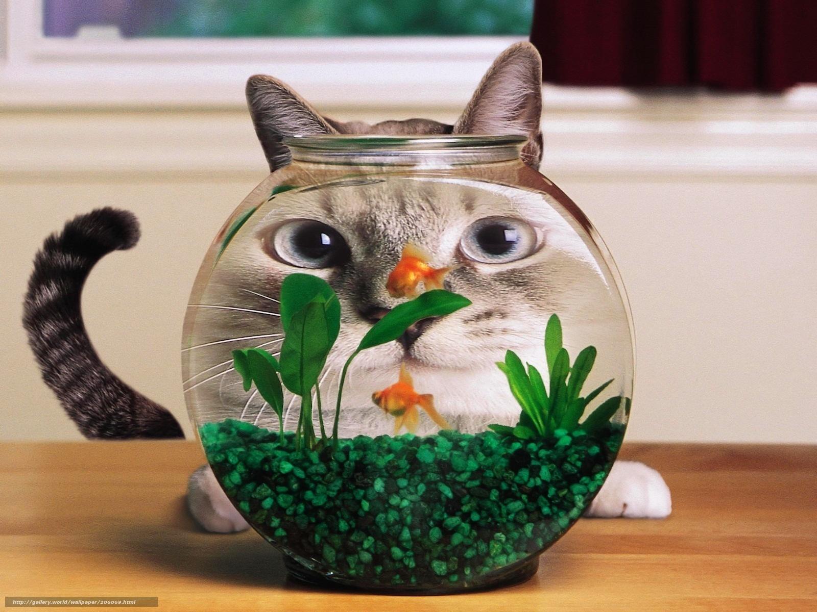 Fish in aquarium desktop wallpaper - Download Wallpaper Cat Aquarium Small Fish Free Desktop Wallpaper In The Resolution 1600x1200 Picture 206069