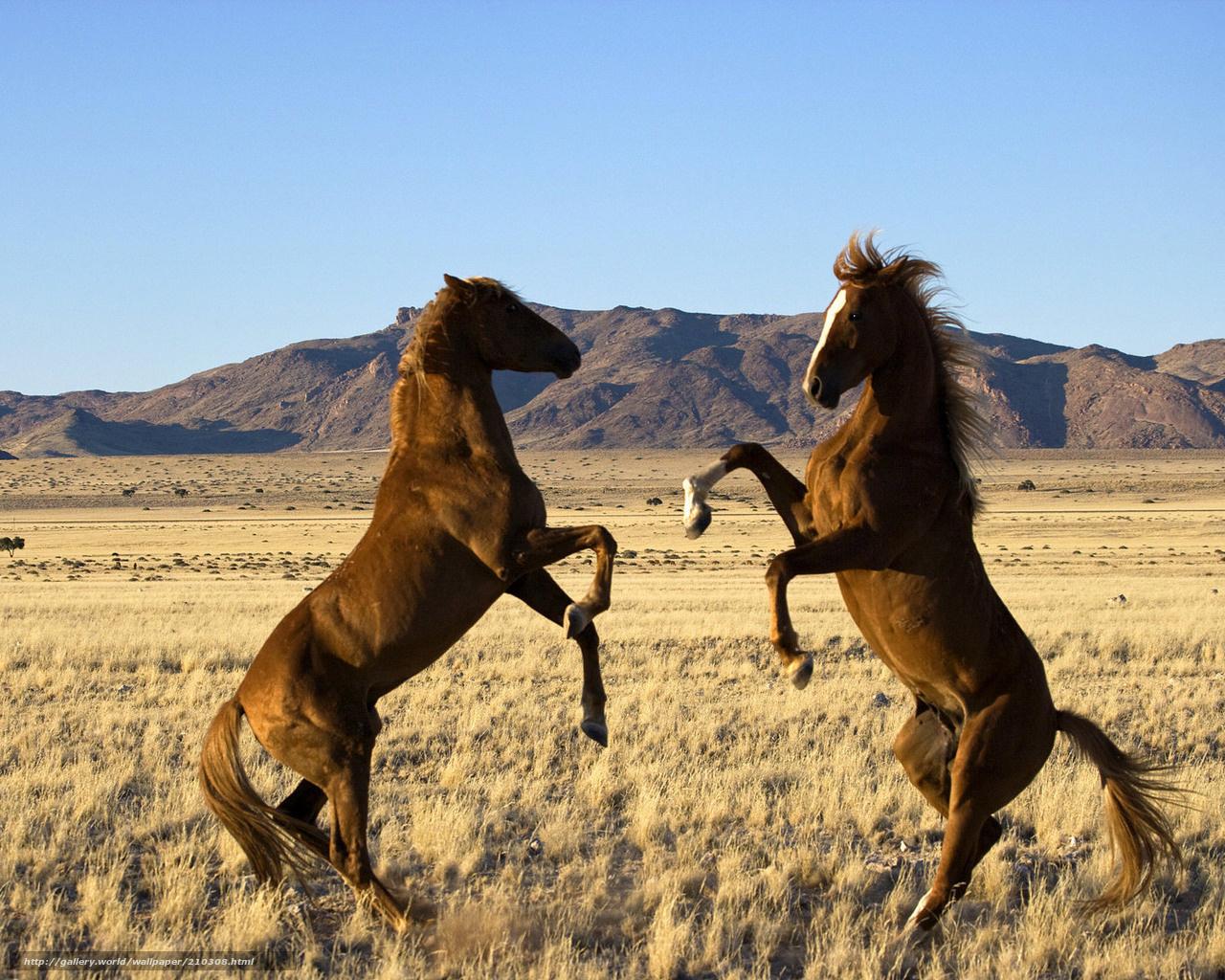 Scaricare gli sfondi cavalli selvaggi steppa erba for Sfondi cavalli gratis