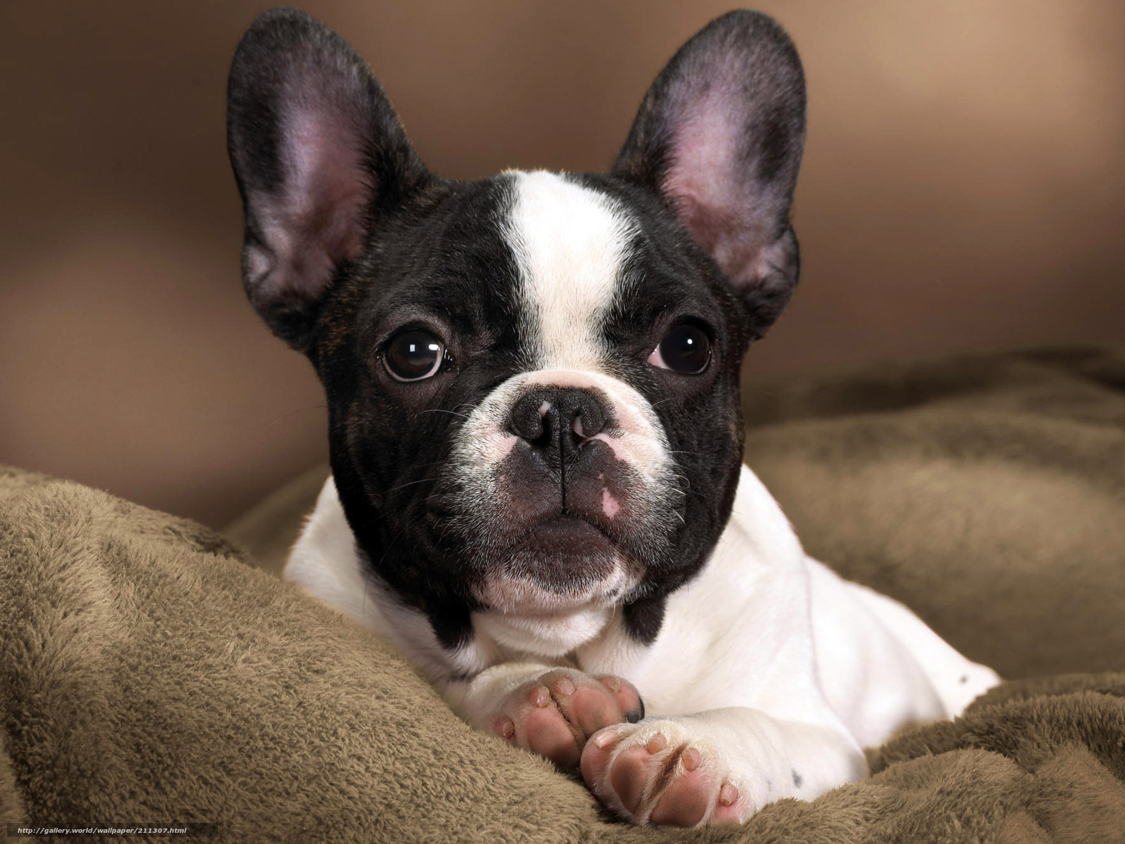 Скачать обои собака,  пёс,  пёсик,  щенок бесплатно для рабочего стола в разрешении 1600x1200 — картинка №211307