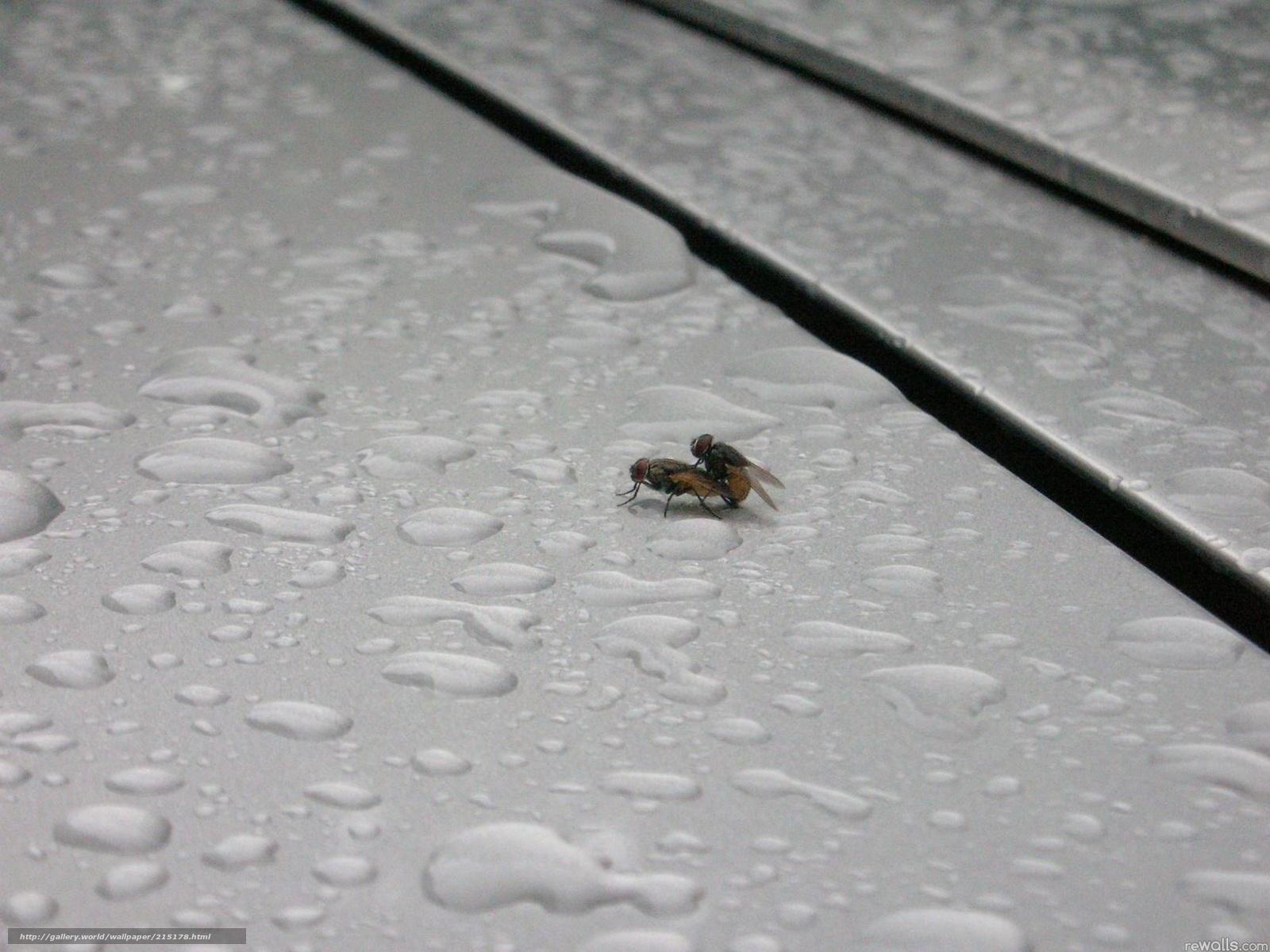 Бесплатное порно муха