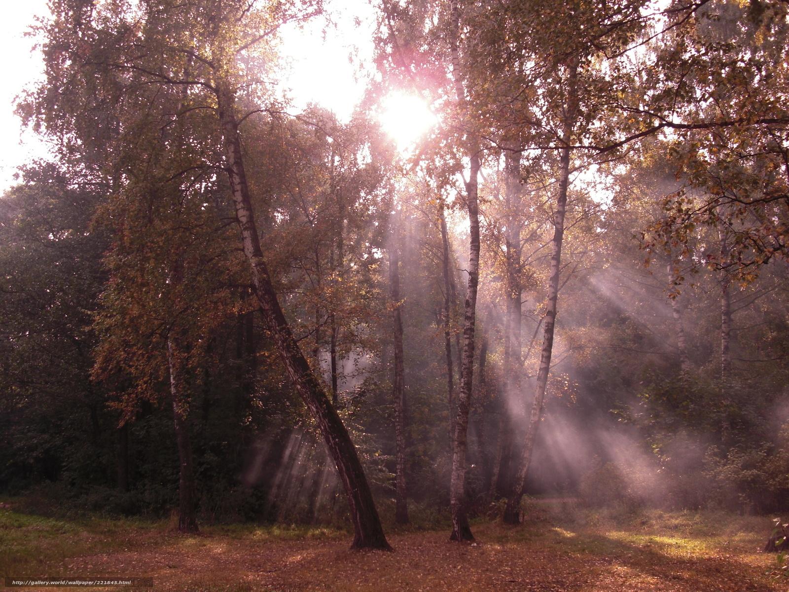 Tlcharger Fond d'ecran arbres,  Bouleau,  fort,  Nature Fonds d'ecran gratuits pour votre rsolution du bureau 2304x1728 — image №221545