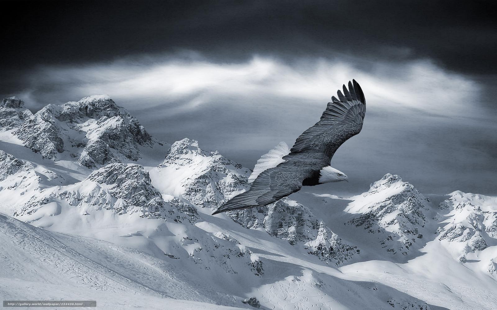 Scaricare gli sfondi aquila montagne inverno neve for Sfondi desktop inverno montagna