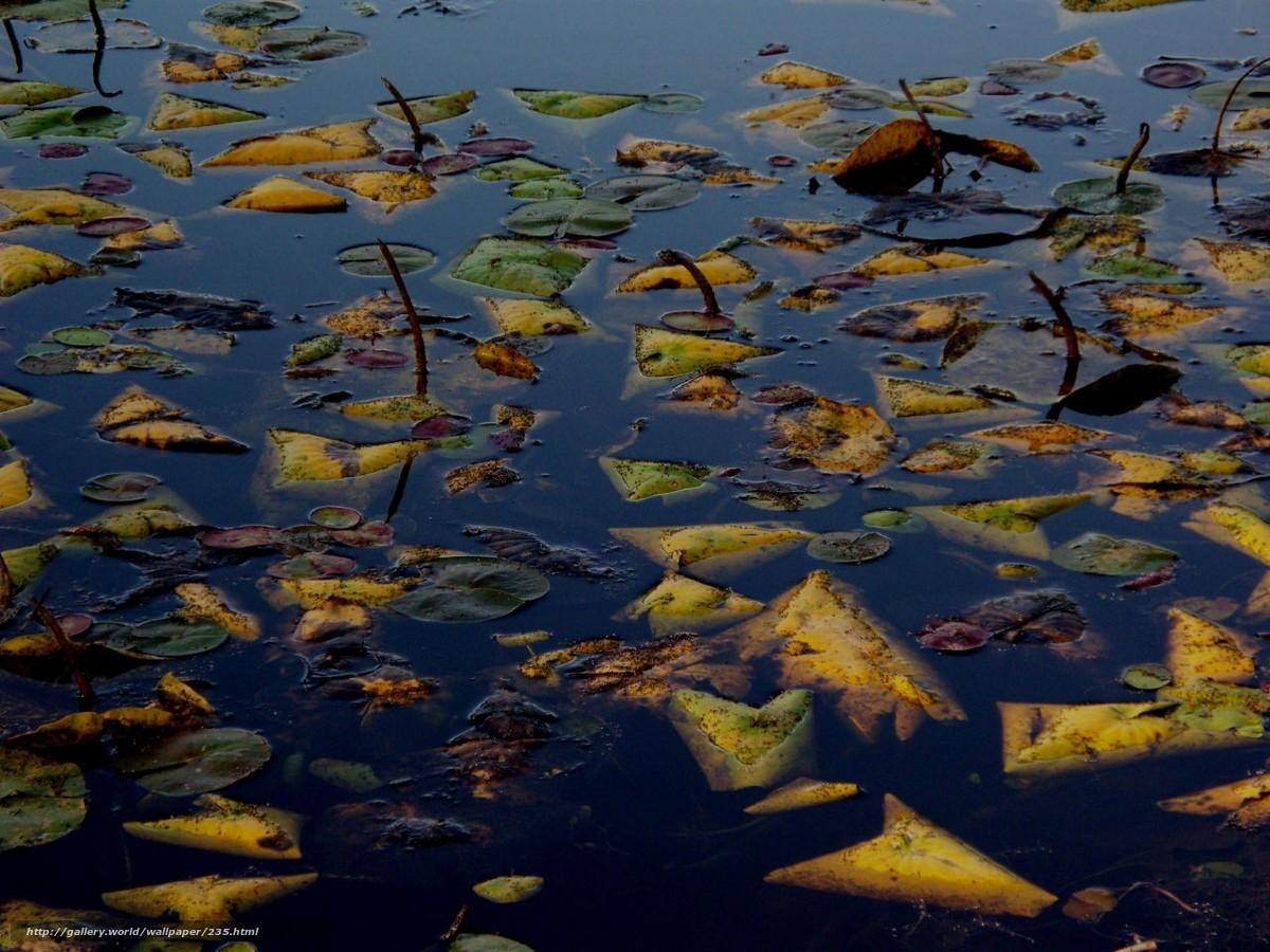 scaricare gli sfondi autunno,  fogliame,  acqua,  lago Sfondi gratis per la risoluzione del desktop 1280x960 — immagine №235
