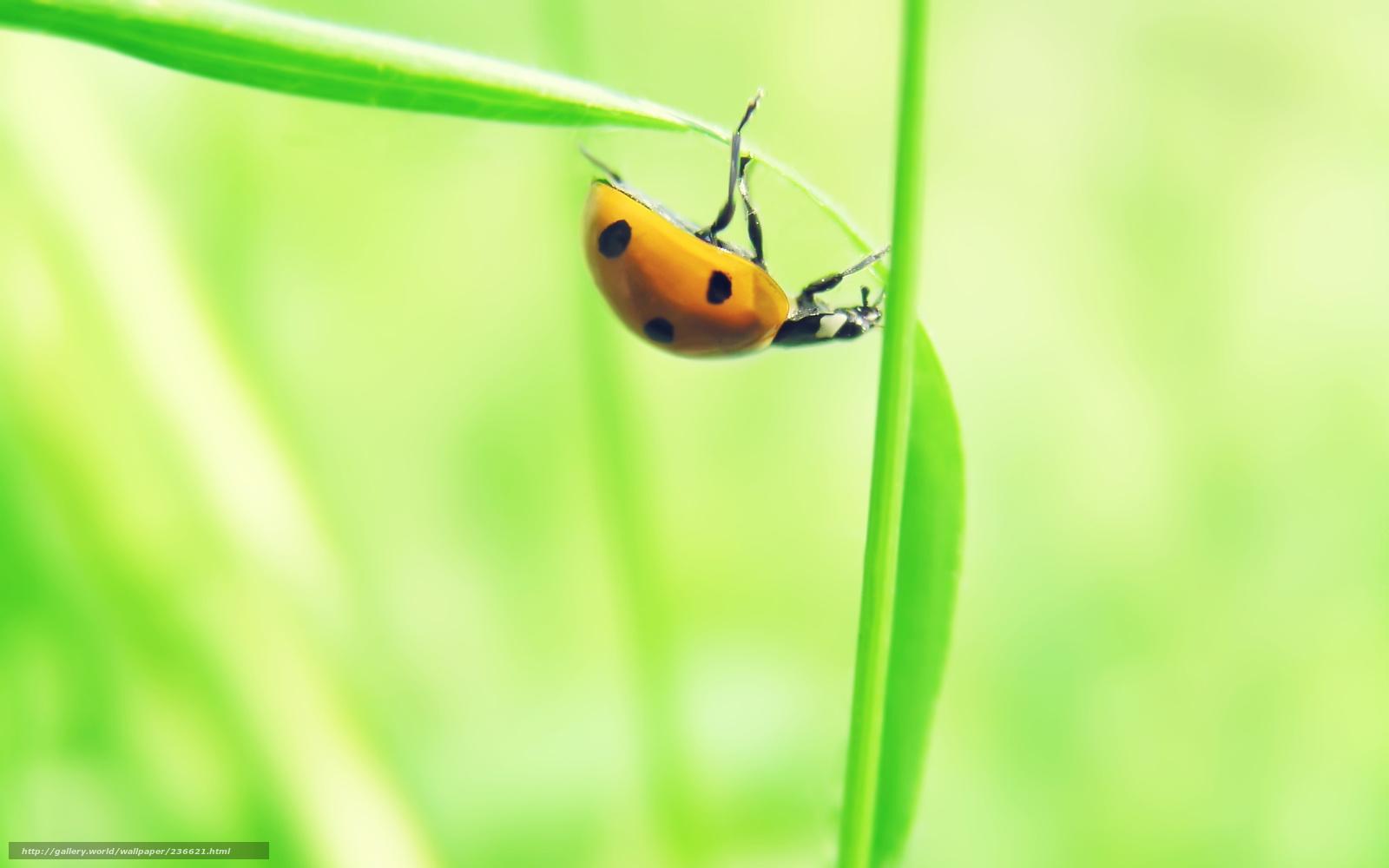 Download wallpaper list,  Sprout,  ladybird,  macro free desktop wallpaper in the resolution 2560x1600 — picture №236621