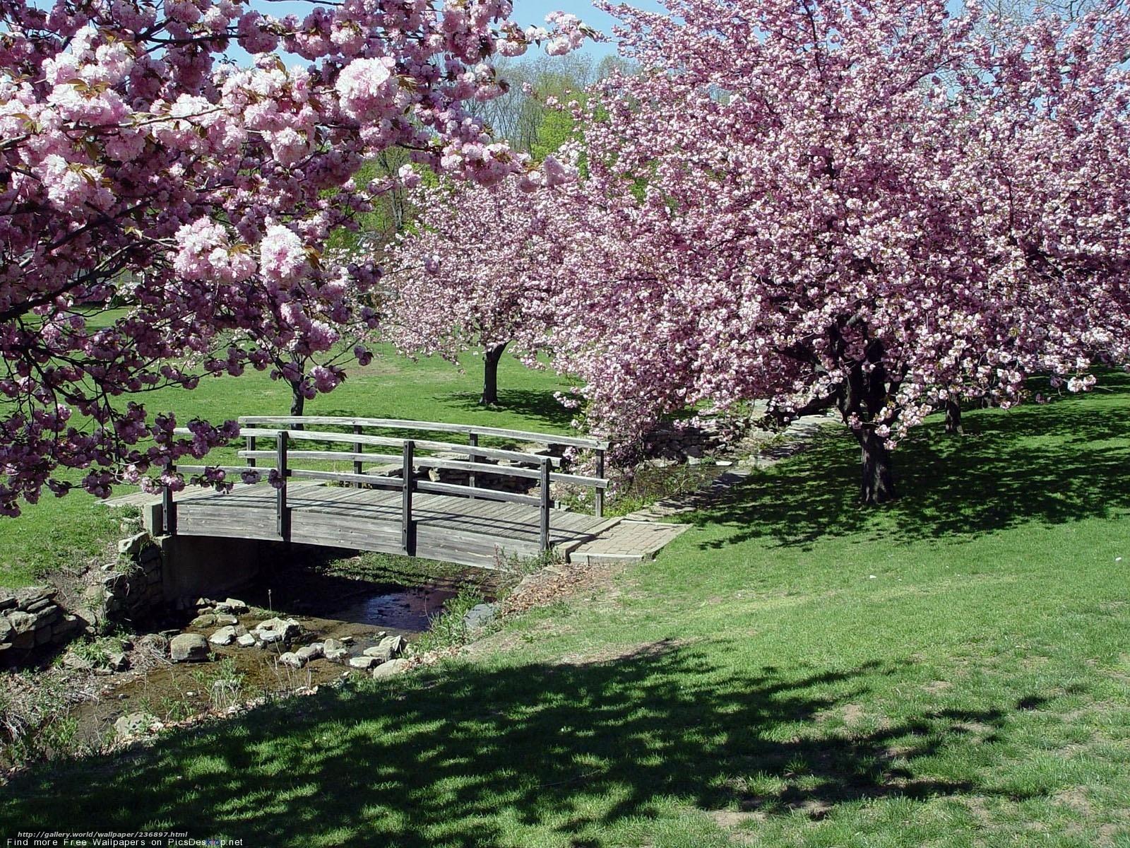 tlcharger fond d 39 ecran sakura pont fleurs printemps fonds d 39 ecran gratuits pour votre. Black Bedroom Furniture Sets. Home Design Ideas