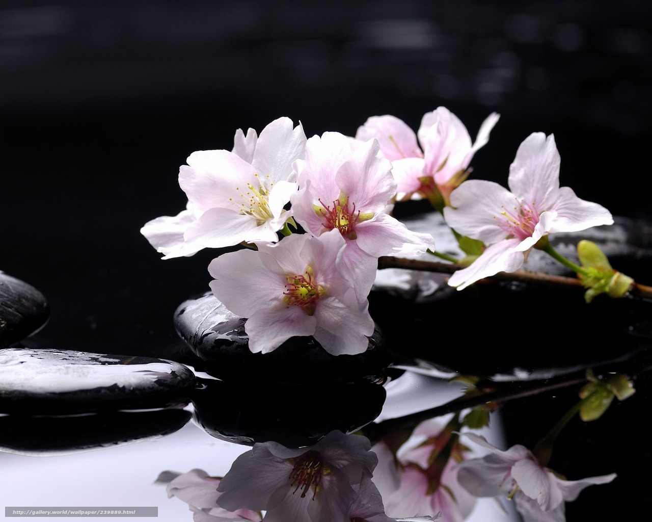 Wallpaper steine blumen  Download Hintergrund Wasser, Blumen, Steine Freie desktop Tapeten in ...
