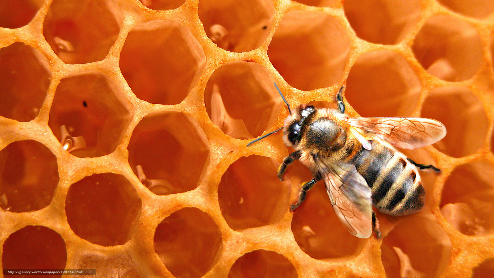 Download Wallpaper Honeycomb Bee Honey Background Free Desktop In The Resolution 1920x1080 Picture No240114