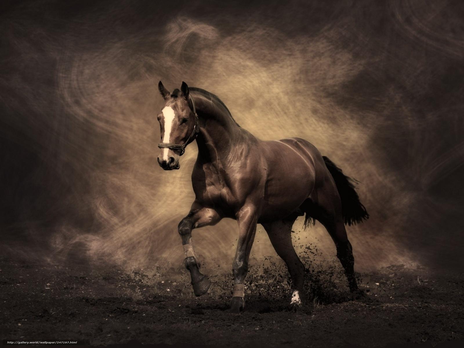 Scaricare gli sfondi animali cavallo cavallo da corsa for Sfondi desktop animali