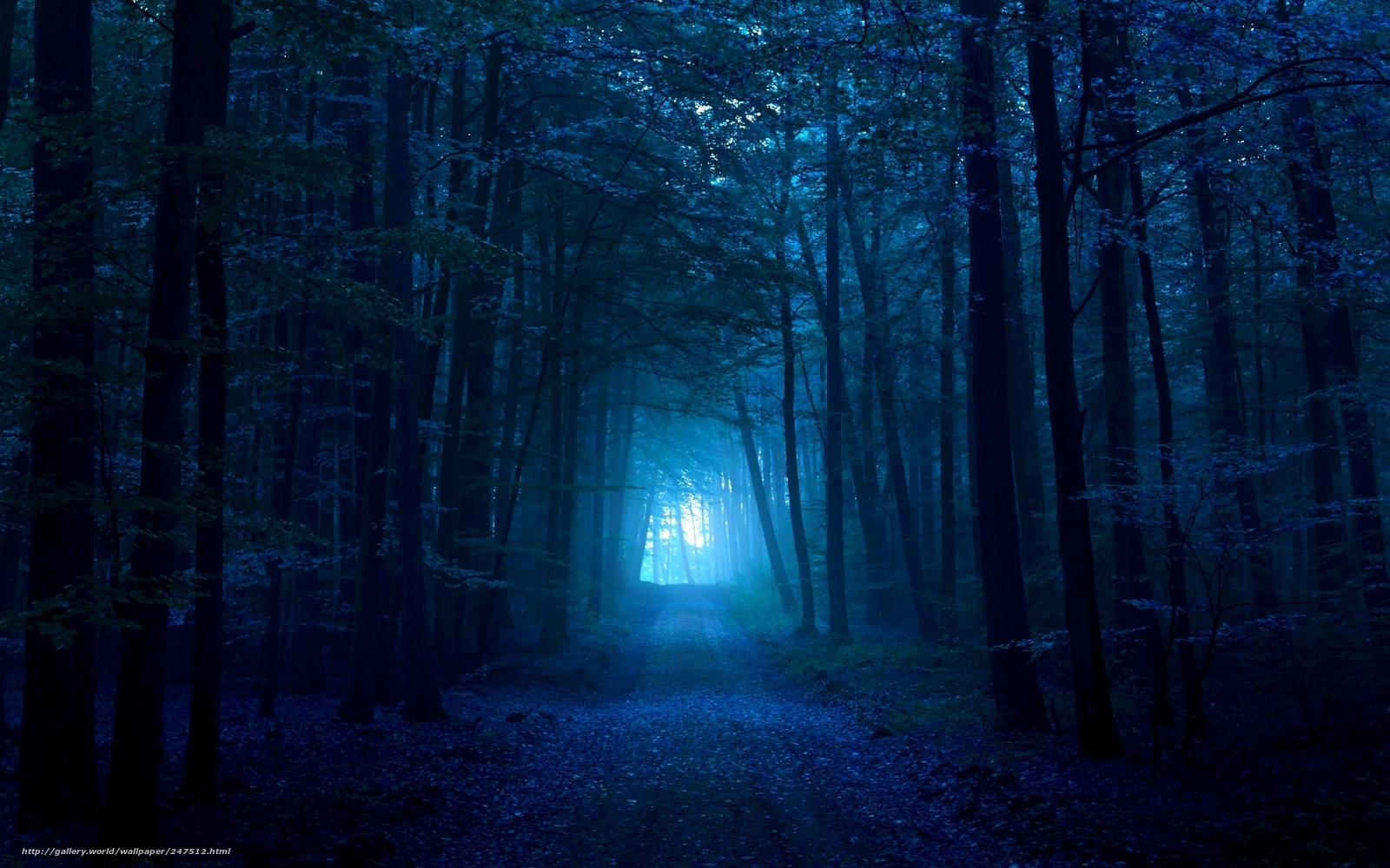 Download Wallpaper Nature Forest Road Night Free Desktop In The Resolution 1920x1200 Picture No247512