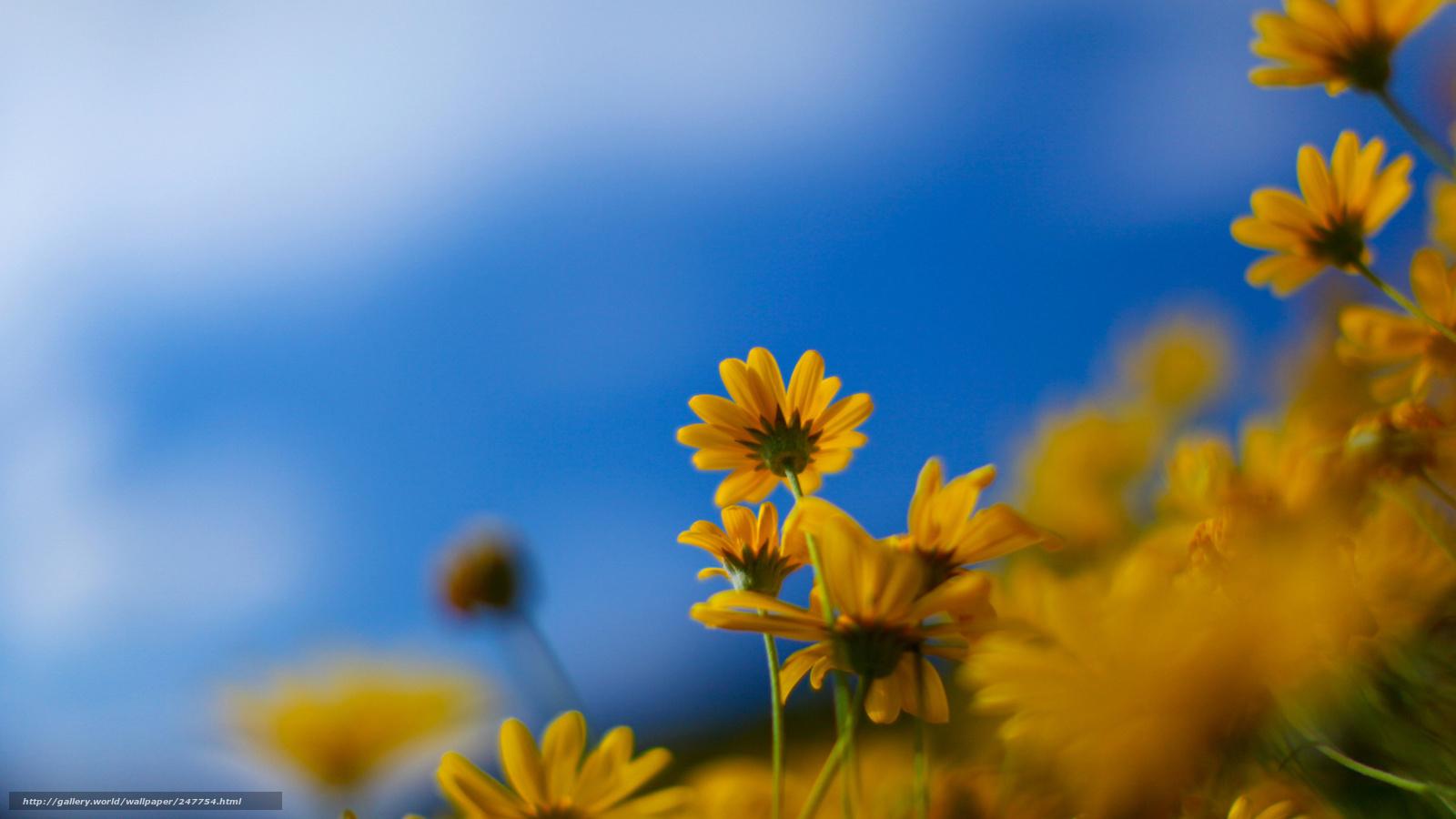 Tlcharger fond d 39 ecran full hd fleurs nature printemps for Fond full hd