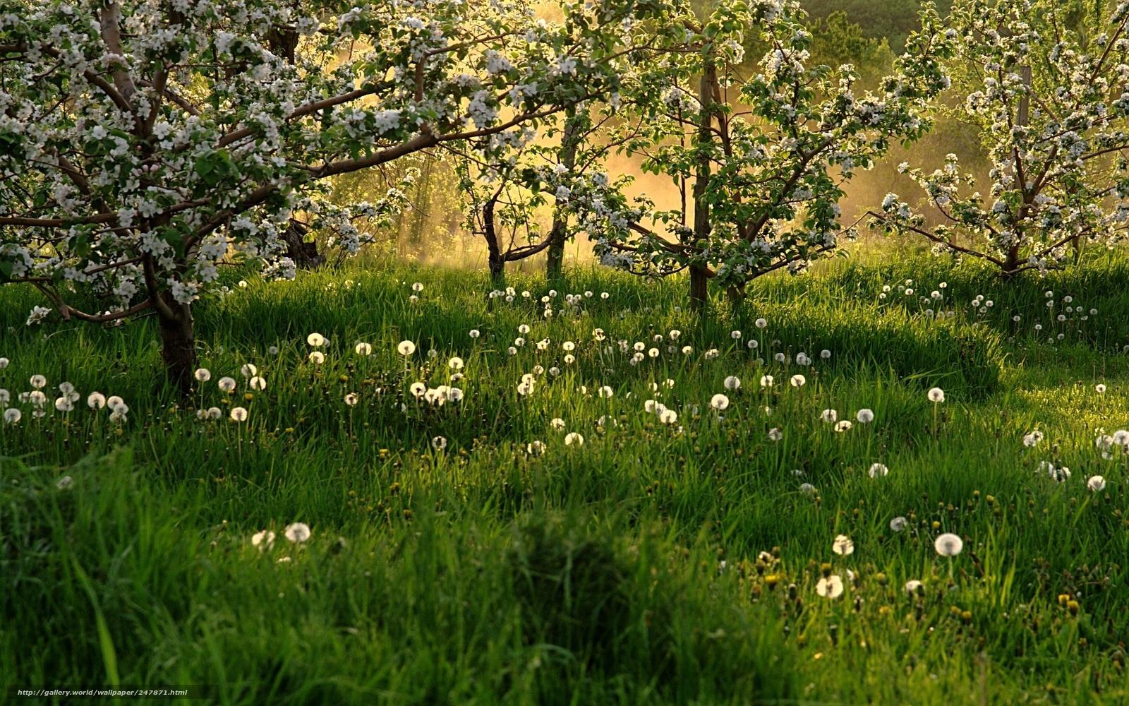 Tlcharger fond d 39 ecran nature printemps prairie arbres - Dandelion hd wallpapers 1080p ...