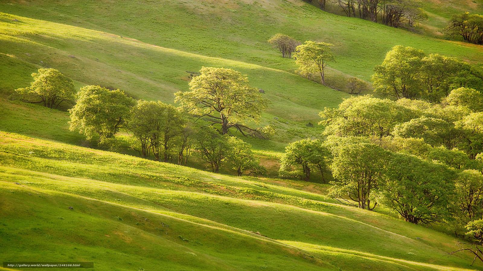 Scaricare gli sfondi hills alberi primavera verdura for Sfondi desktop gratis primavera