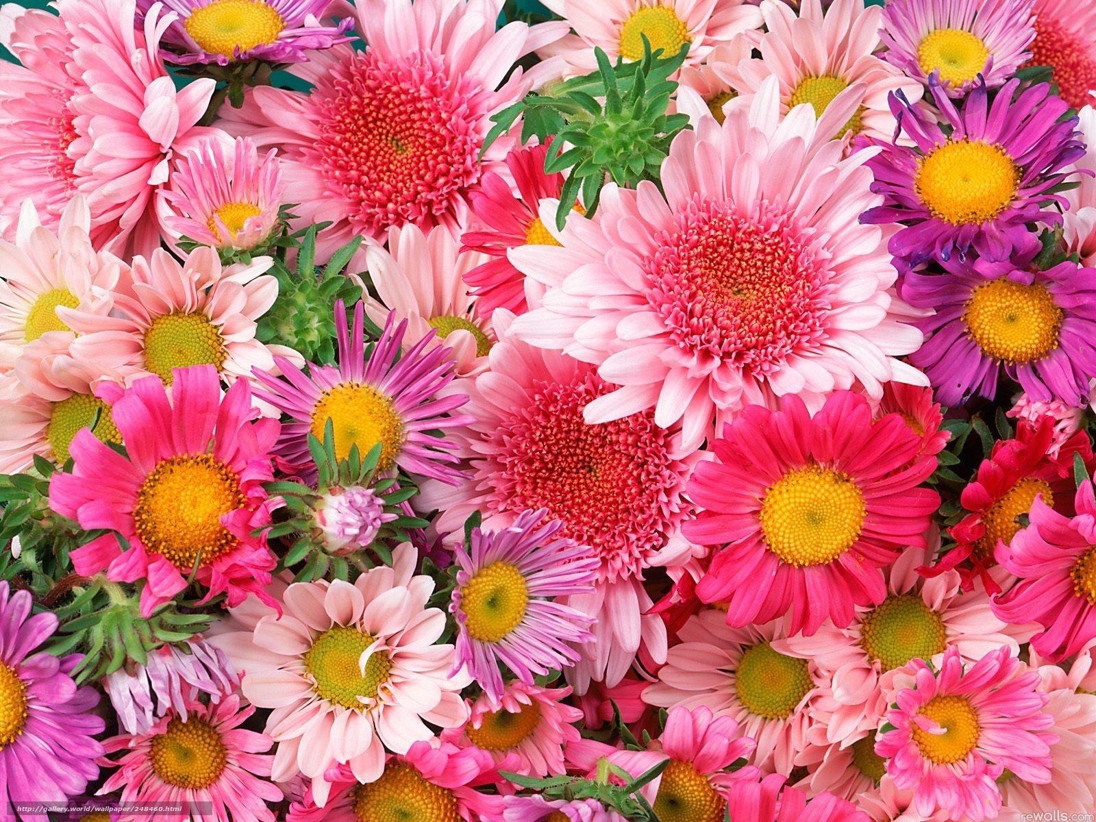 Scaricare gli sfondi fiori colorati profumatamente sogno for Immagini per desktop fiori
