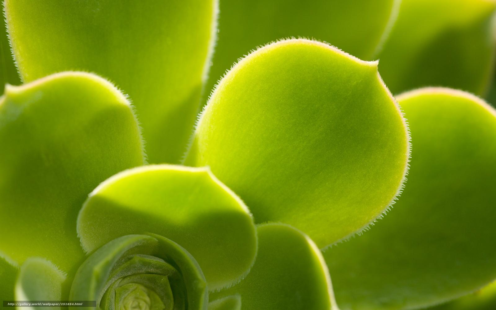 Scaricare Gli Sfondi Fiore Verde Natura Sfondi Gratis Per La
