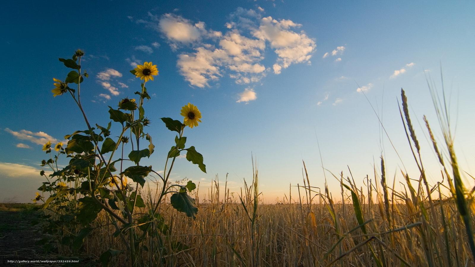 Descargar gratis campo cielo verano fondos de escritorio en la resolucin 1920x1080 imagen - Fondos de escritorio verano ...