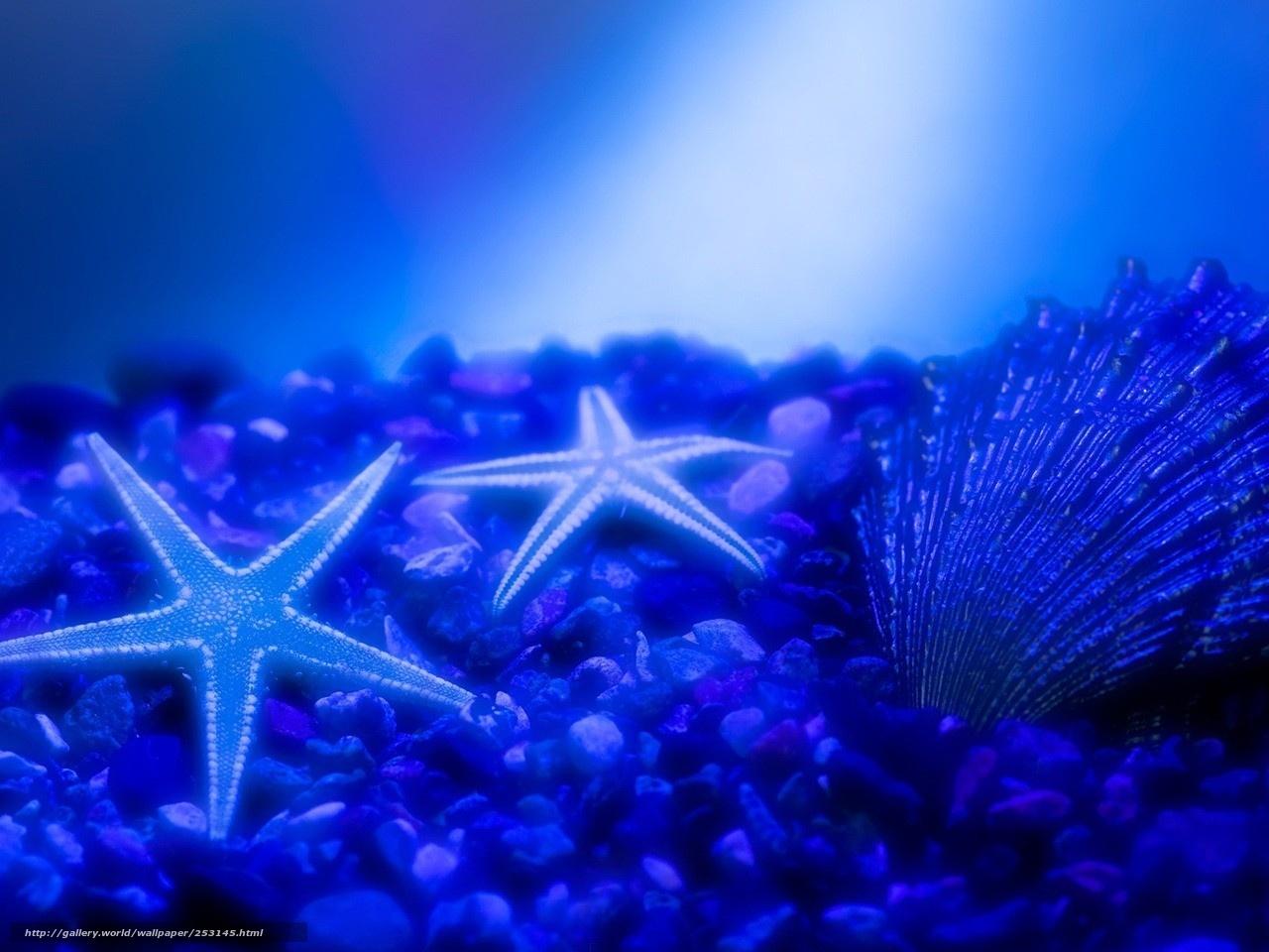 Scaricare Gli Sfondi Mare Stella Mare Azzurro Sfondi Gratis Per