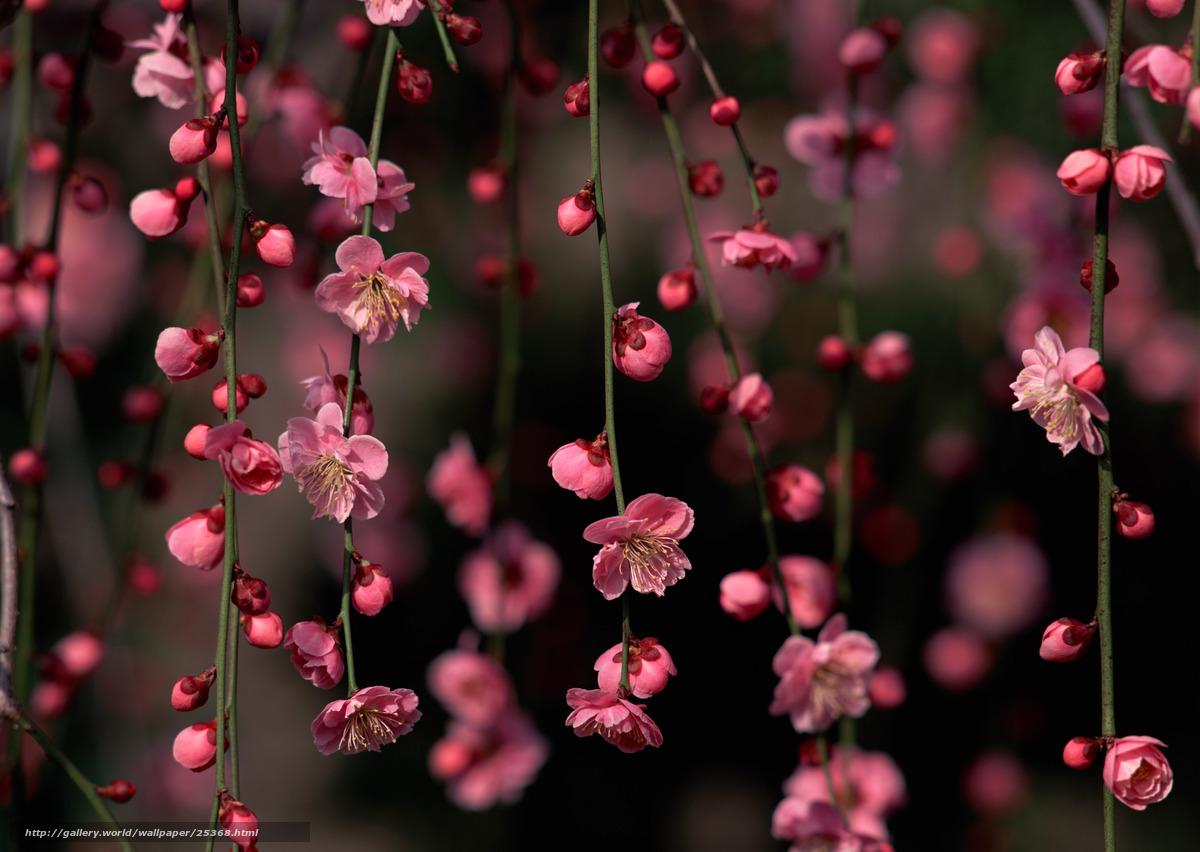 Baixar Wallpaper Flores,  ramo,  sakura,  buds Papis de parede grtis na resoluo 2950x2094 — quadro №25368