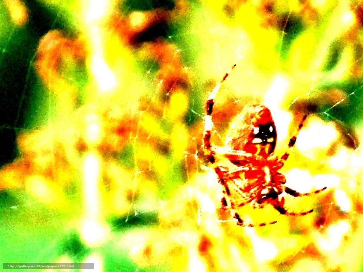 Скачать обои фон,  жёлтый,  паук,  паутина бесплатно для рабочего стола в разрешении 1280x960 — картинка №253